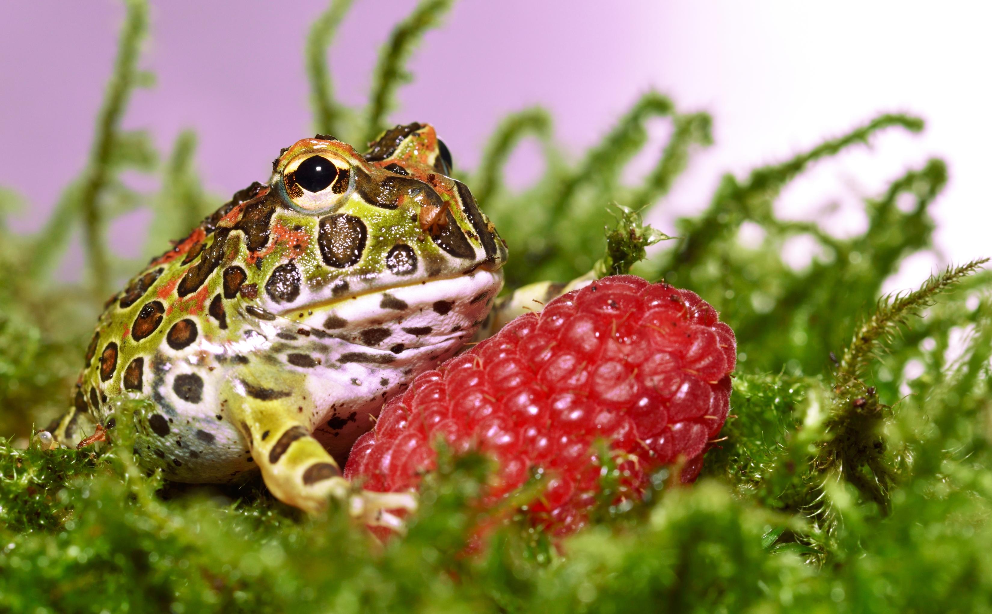 Картинки лягушки и жабы