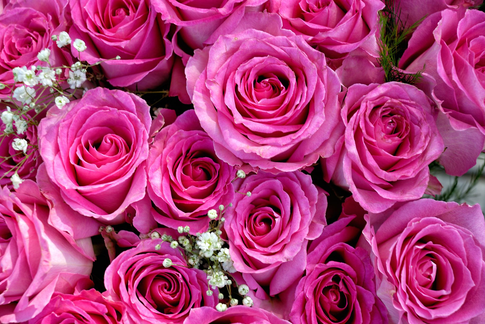 Картинки с розами для планшета