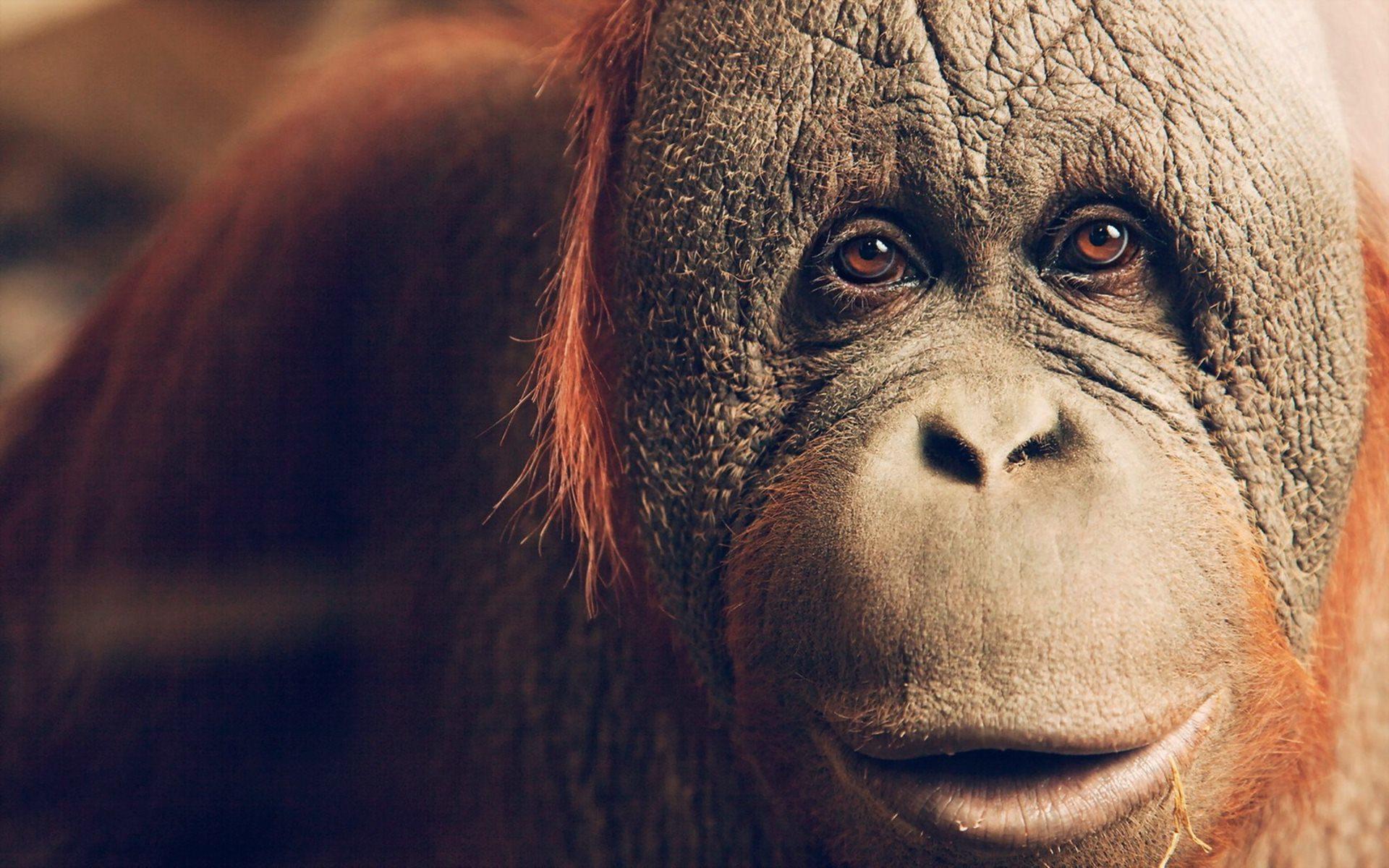 картинки на рабочий стол лица животных первую очередь
