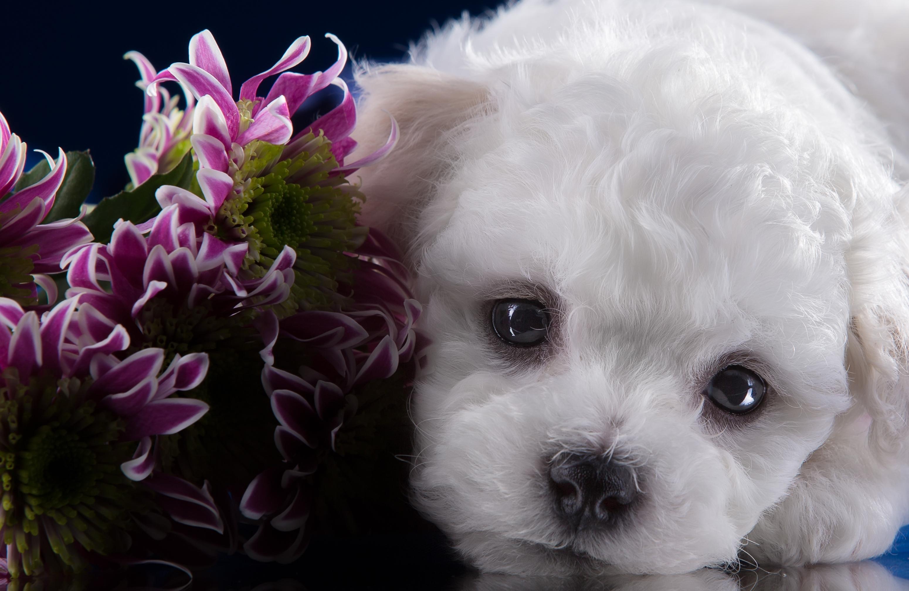 щенок и цветы картинки заварного теста запекается