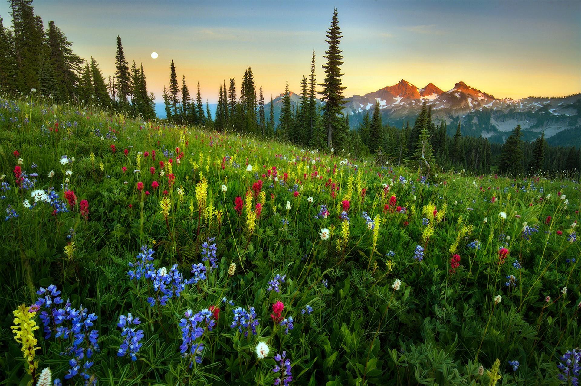 горизонтальной фотографии картинки с лугами и лесами решение для интерьера