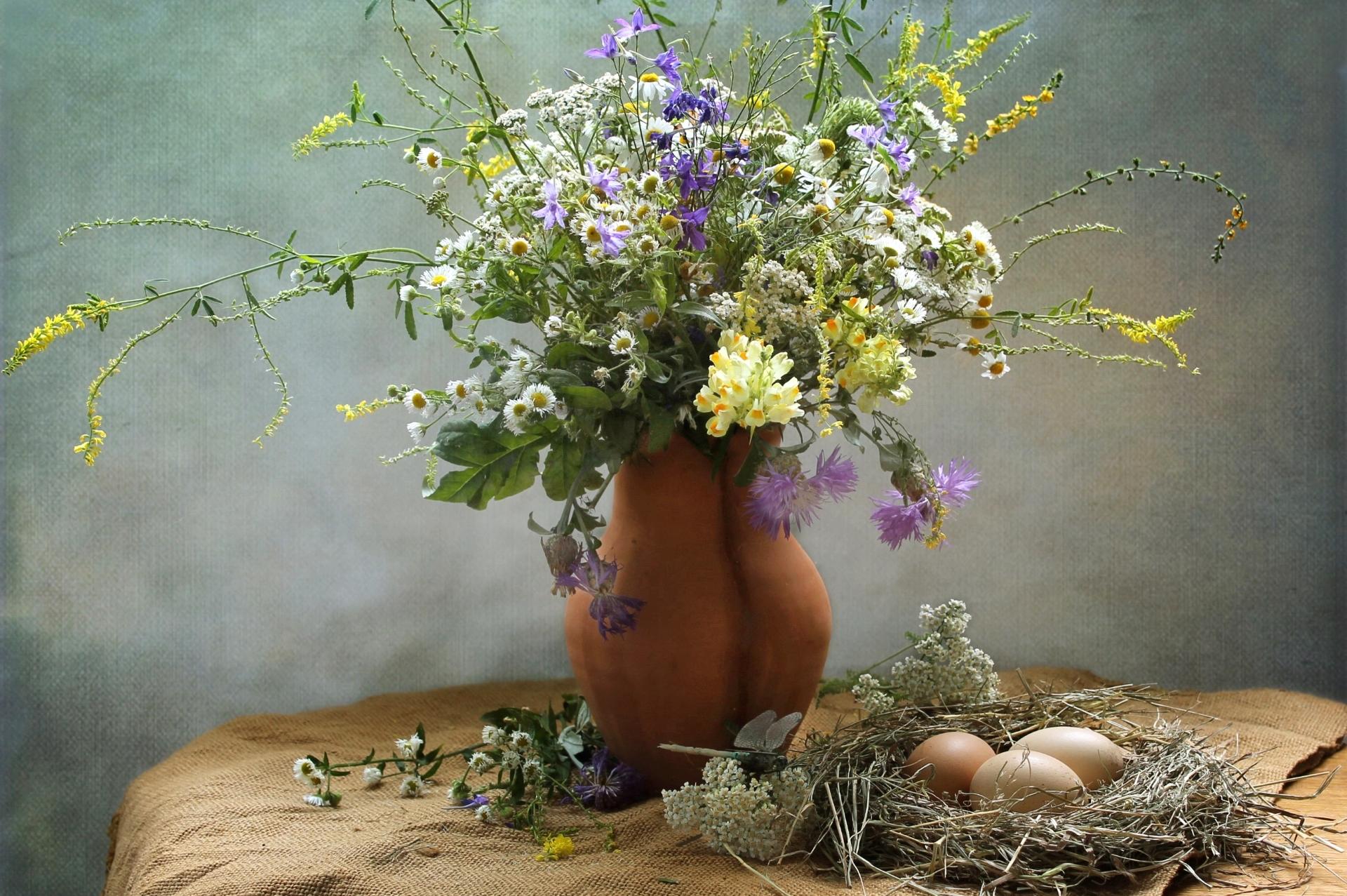 полевые травы букет картинки жозефина имеет