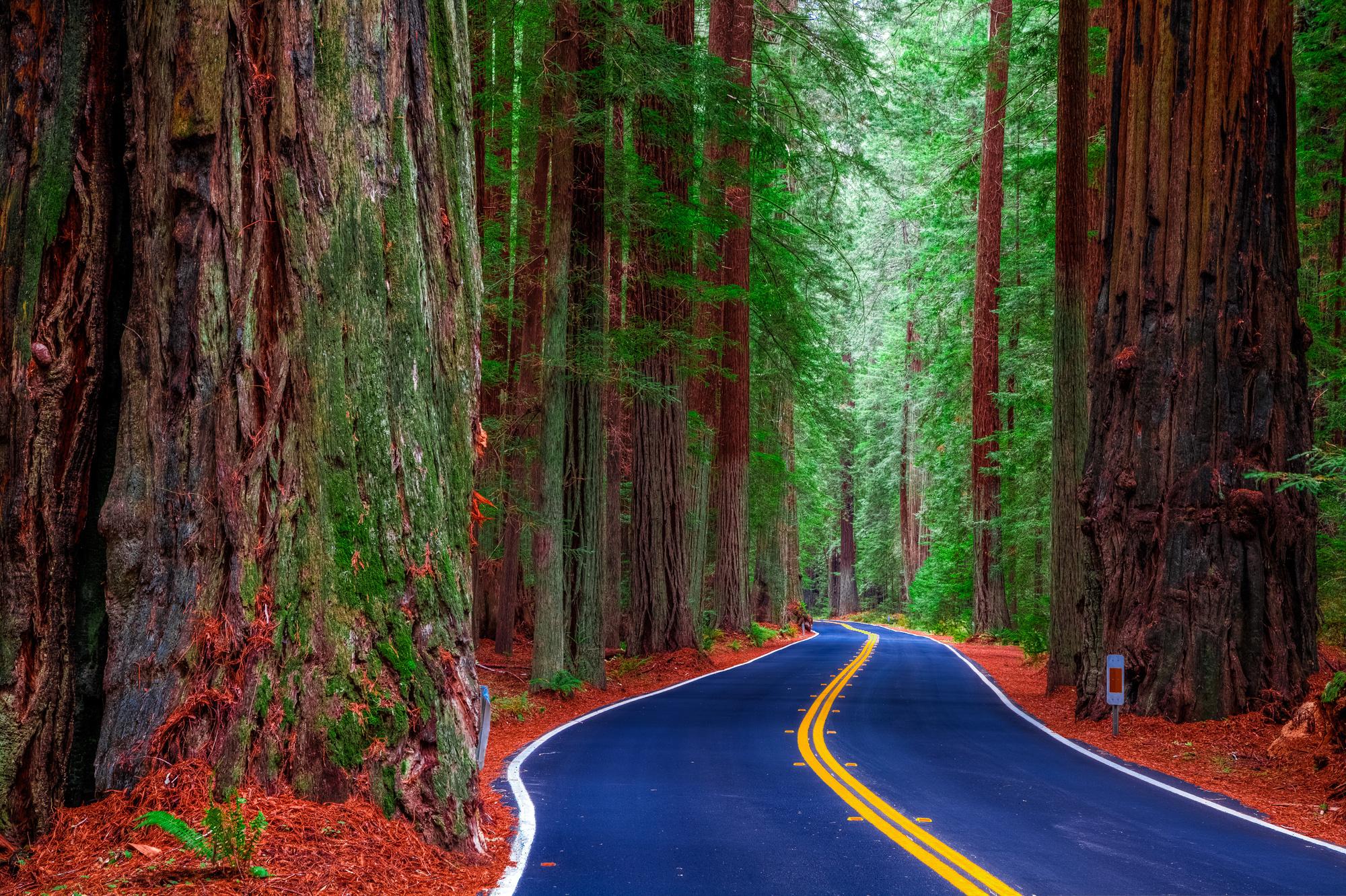 американский лес фото кольца получаются нежными