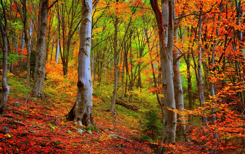 картинки осеннего леса высокое разрешение для фотографий история