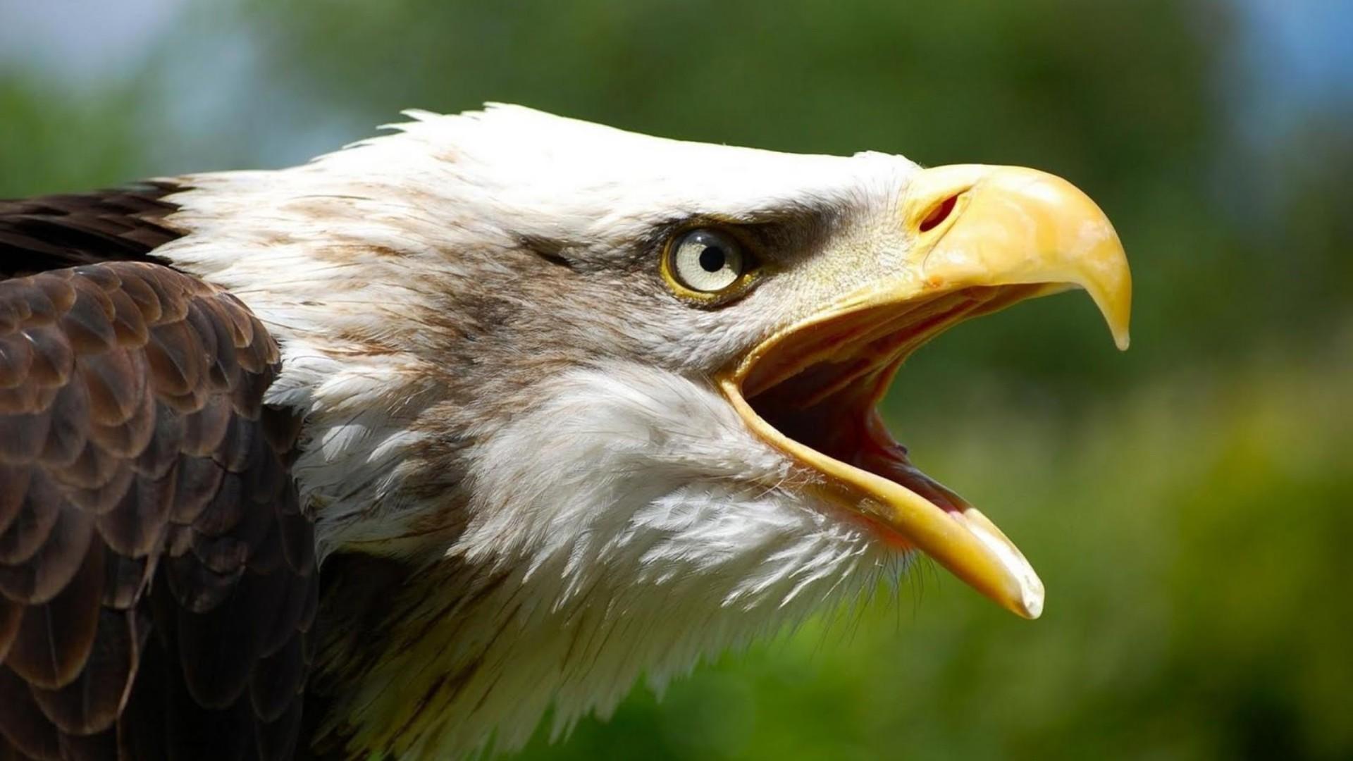 Фото белого орлана