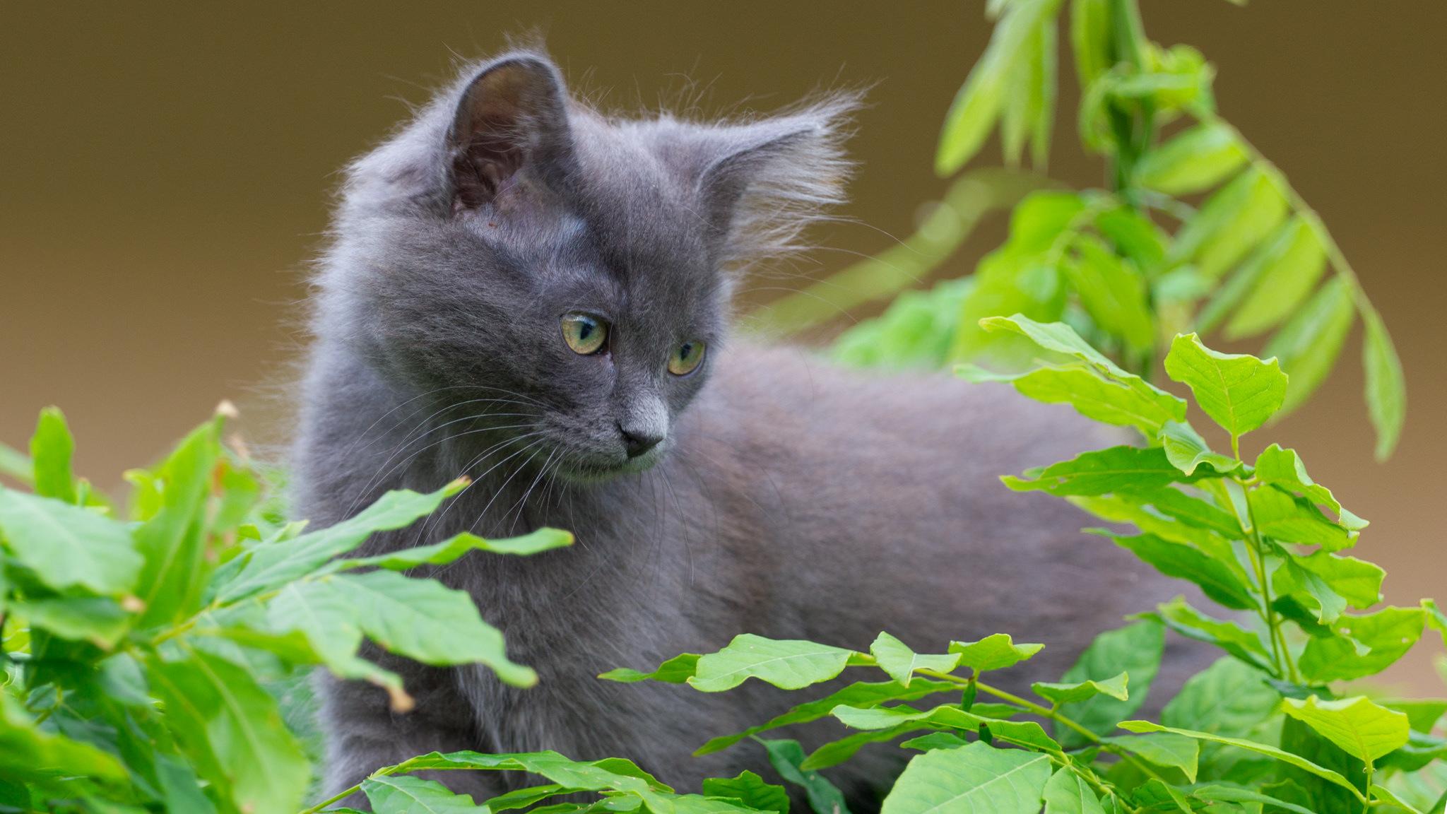 картинки с серыми кошками на рабочий стол института виделись, разошлись