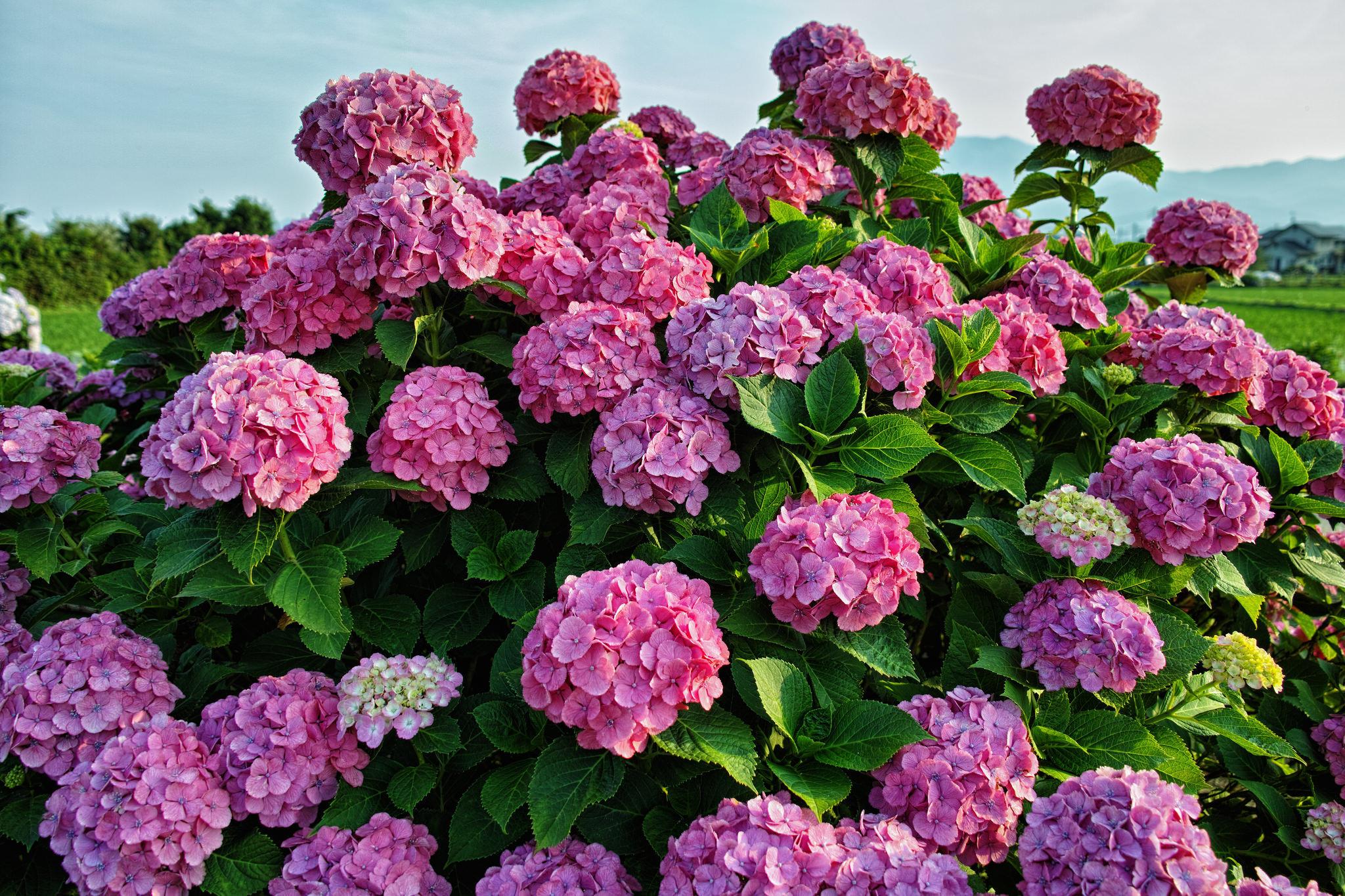 картинки для рабочего стола садовые цветы собирание либо