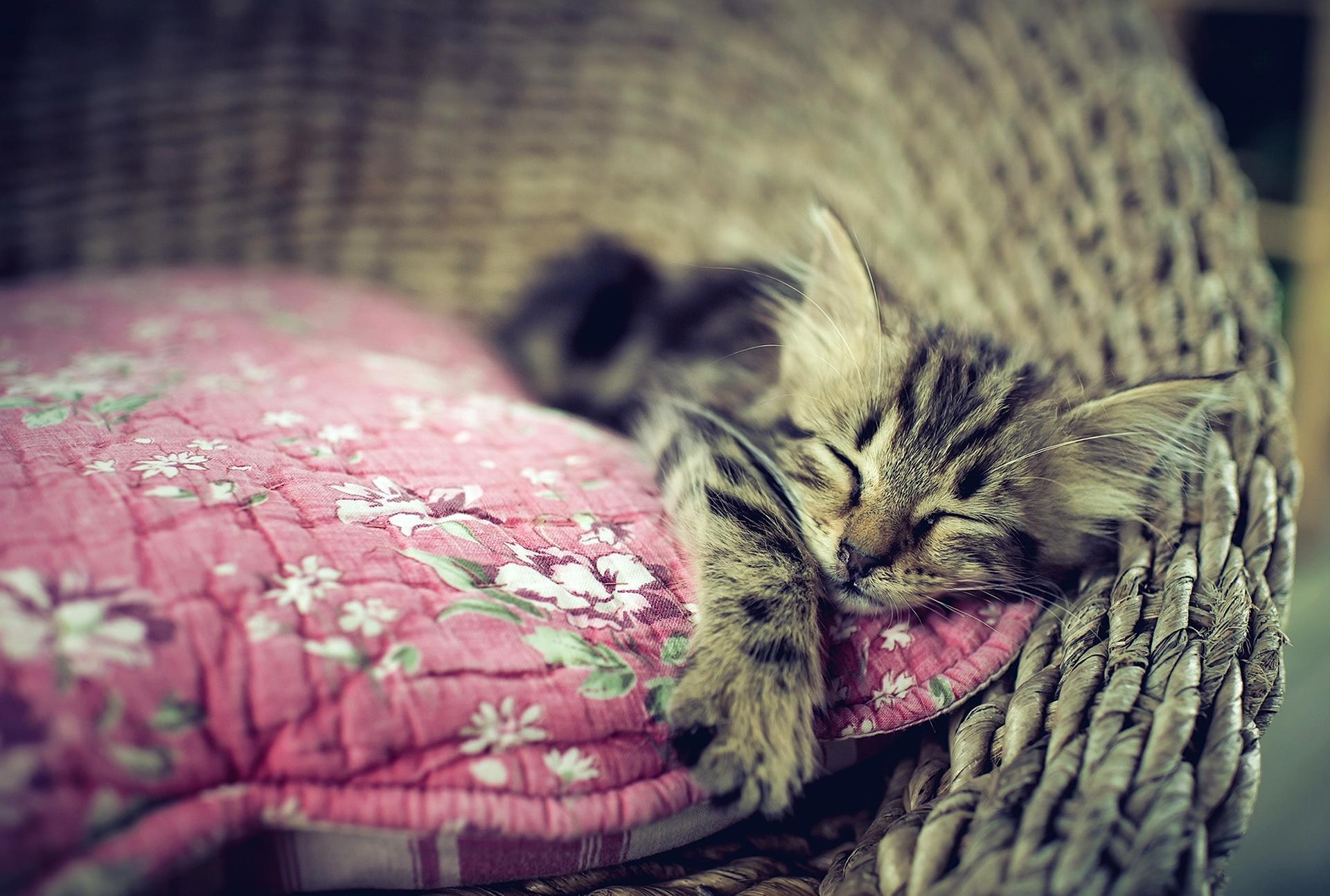 Картинки на рабочий стол спящие котята
