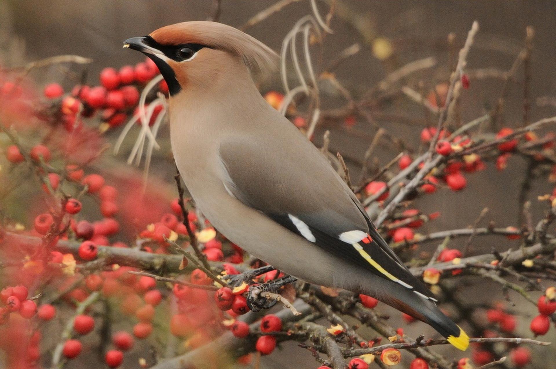Фото зимородка птицы игра