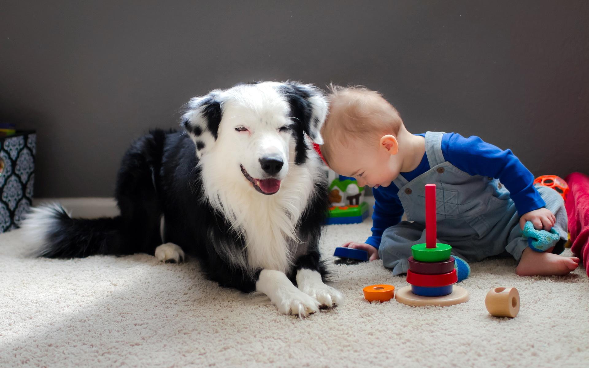 обои для рабочего стола собаки мальчика № 626519  скачать