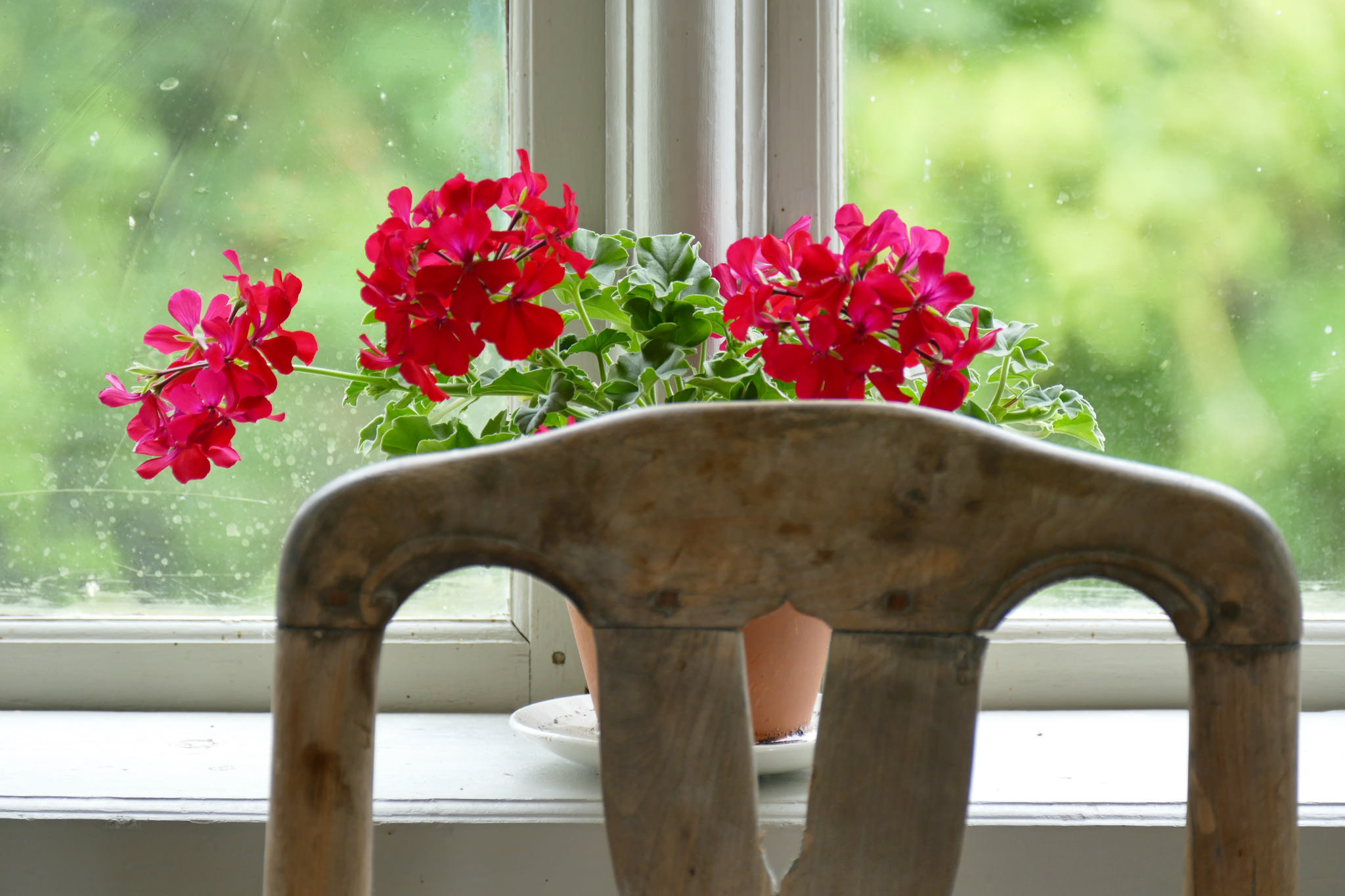 Цветы из окна фото картинки