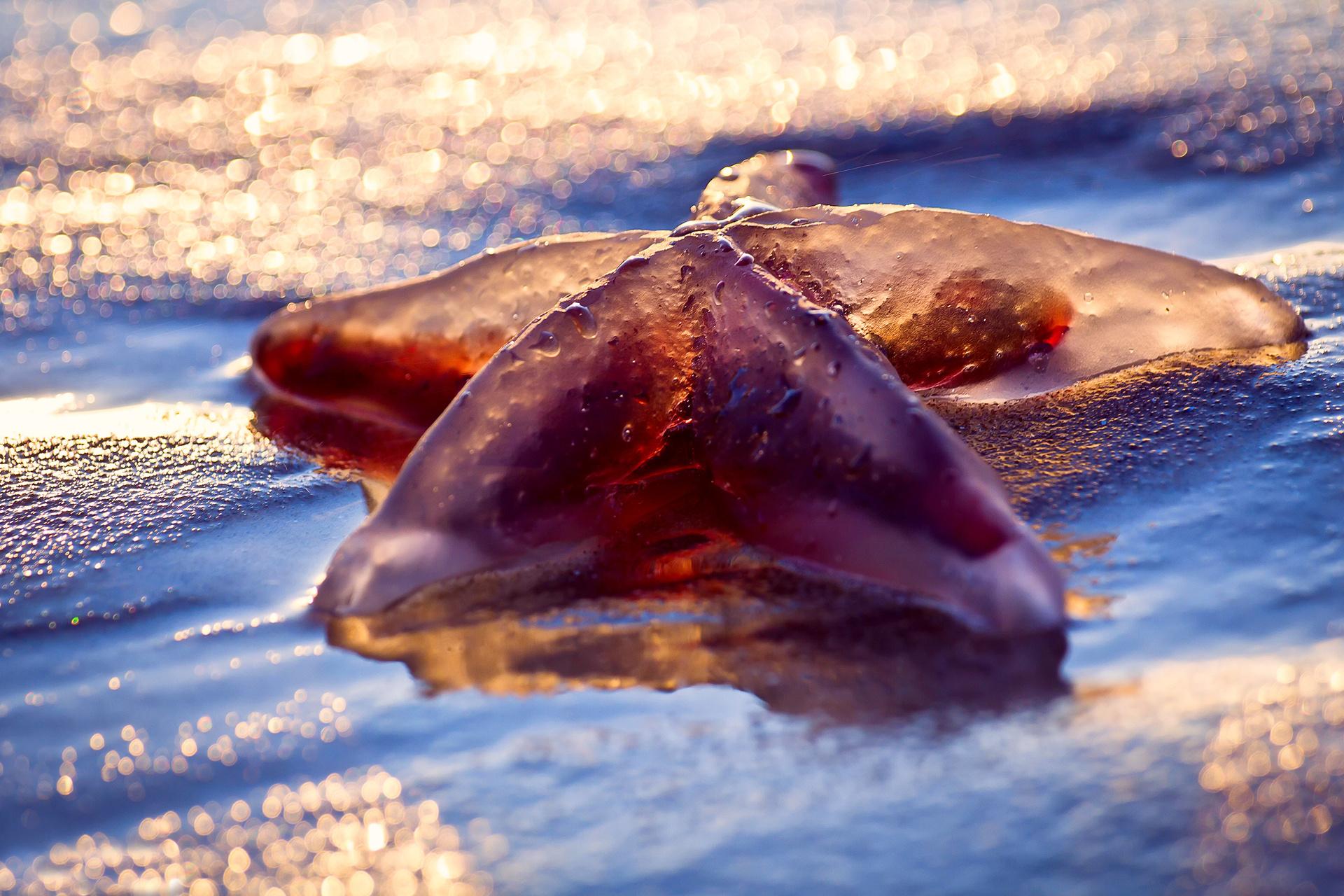 вот картинки морские звезды дельфины кустики полутени, местах