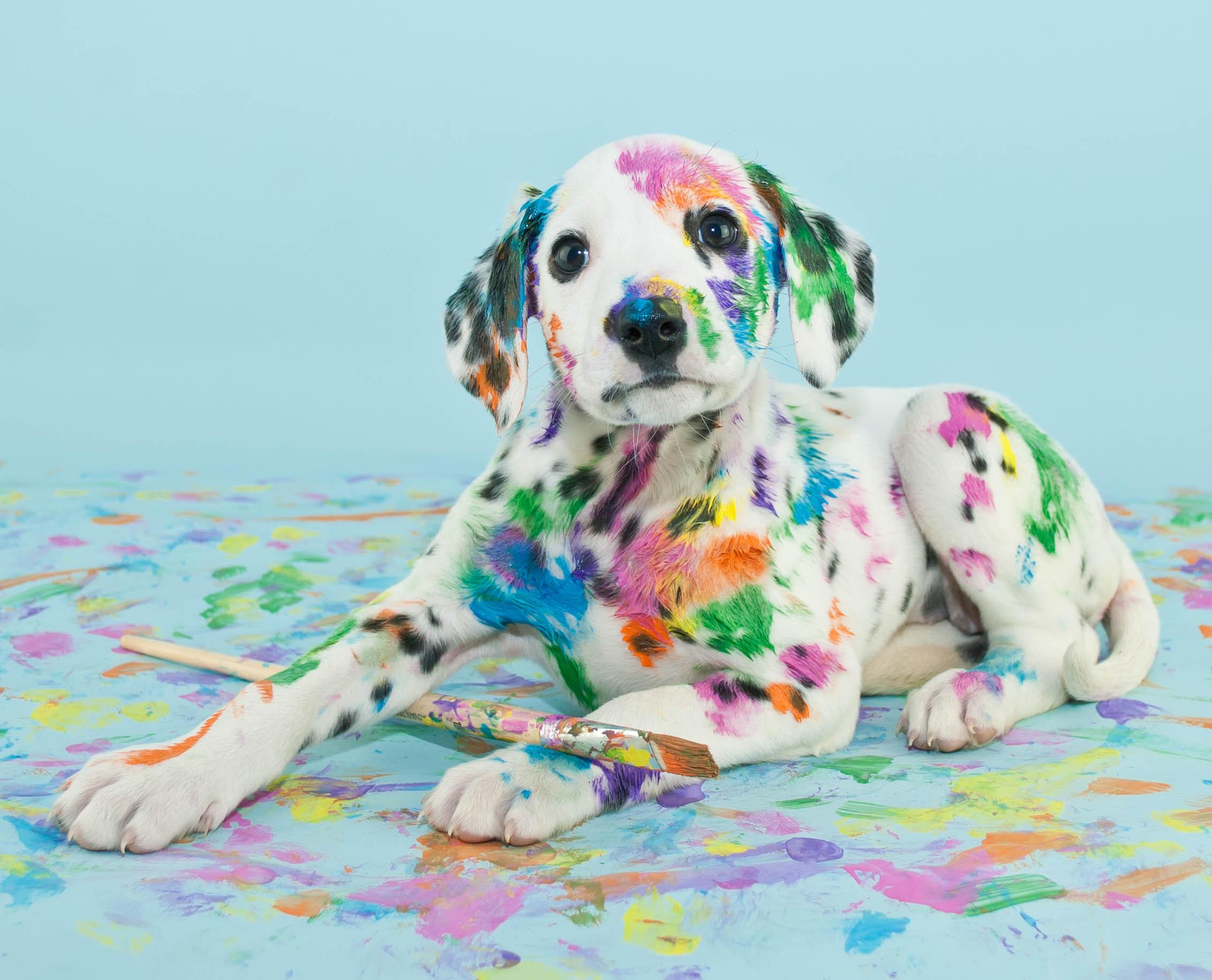 Обои краски, щенок, яйца, кисти. Собаки foto 15