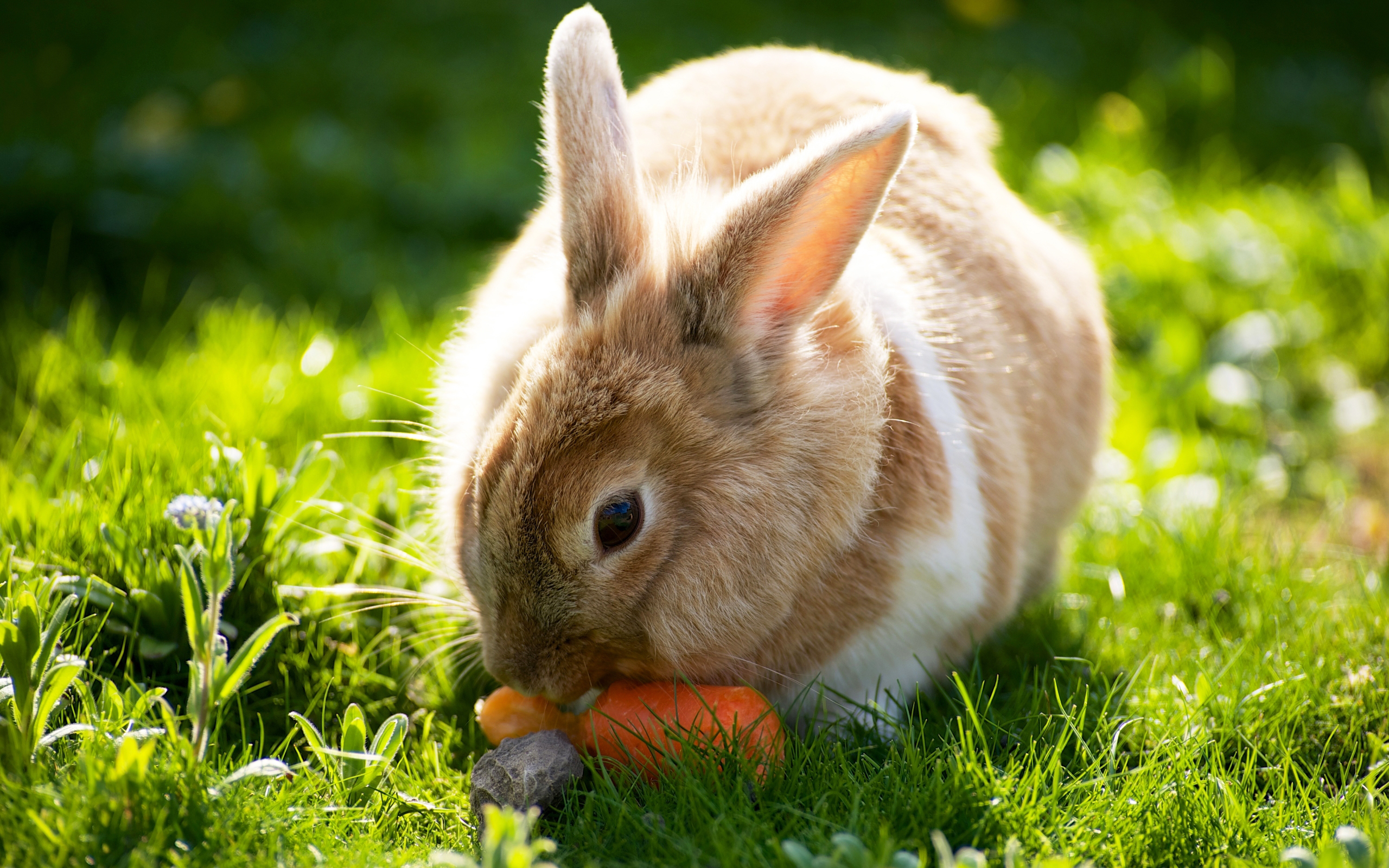 Кролики кушают картинки