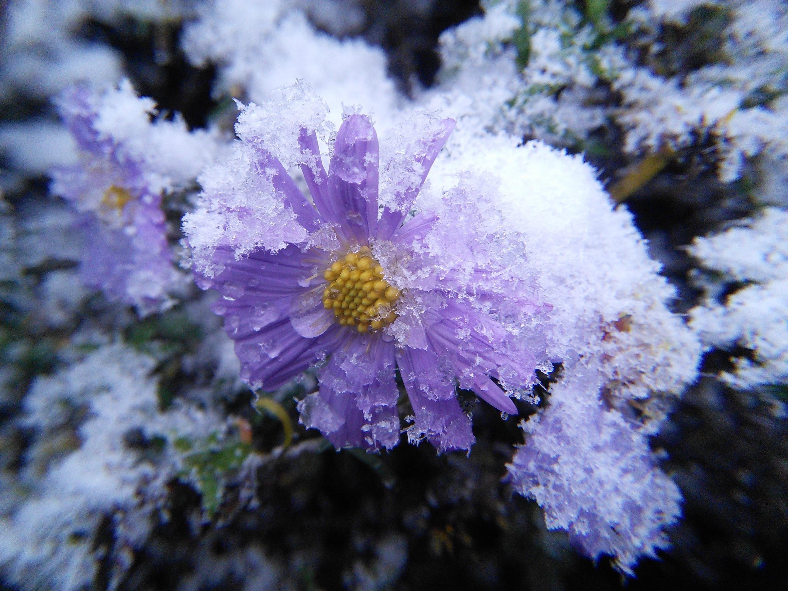 Цвет снега на фотографии