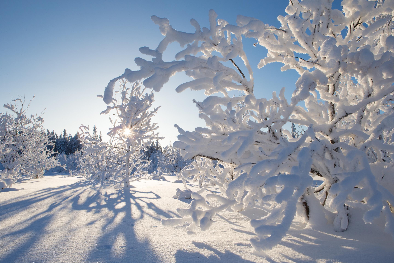 качестве фотографии про снег даже