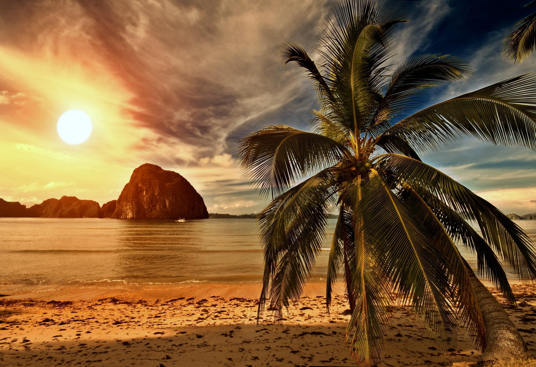 фото пальмы высокого качества могут