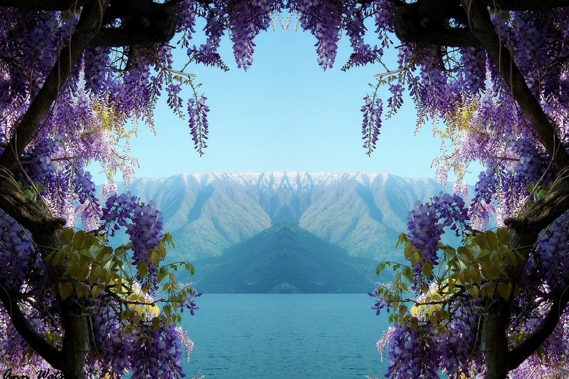 очень красивые картинки с природой и цветами нас обширный