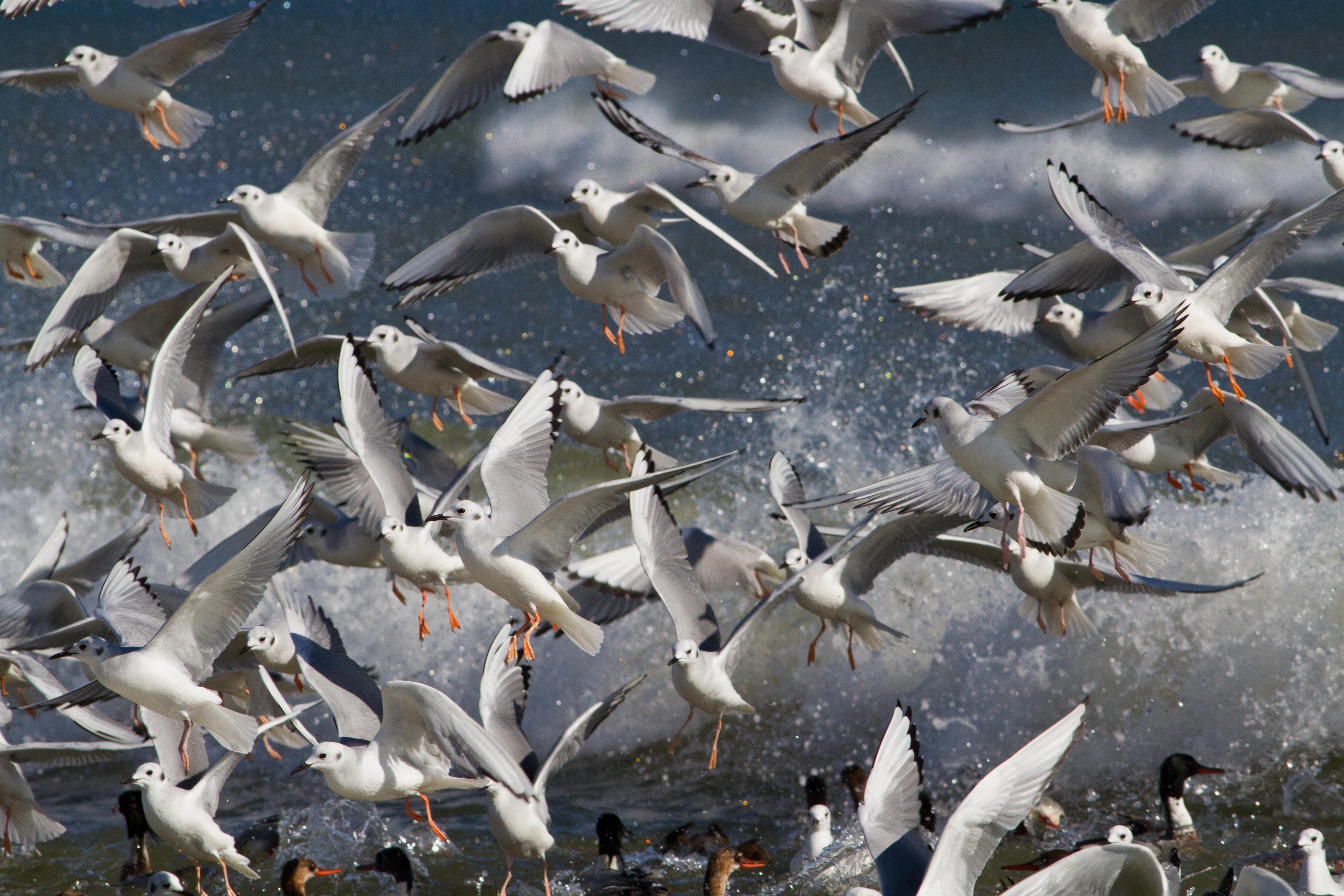 мой мир фото птиц читать, когда