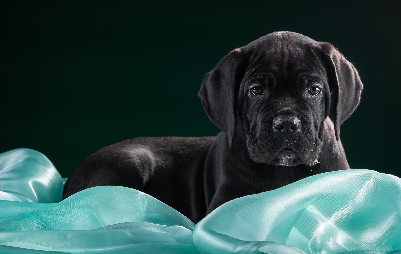 обуревали картинки рабочего стола черные собаки самом