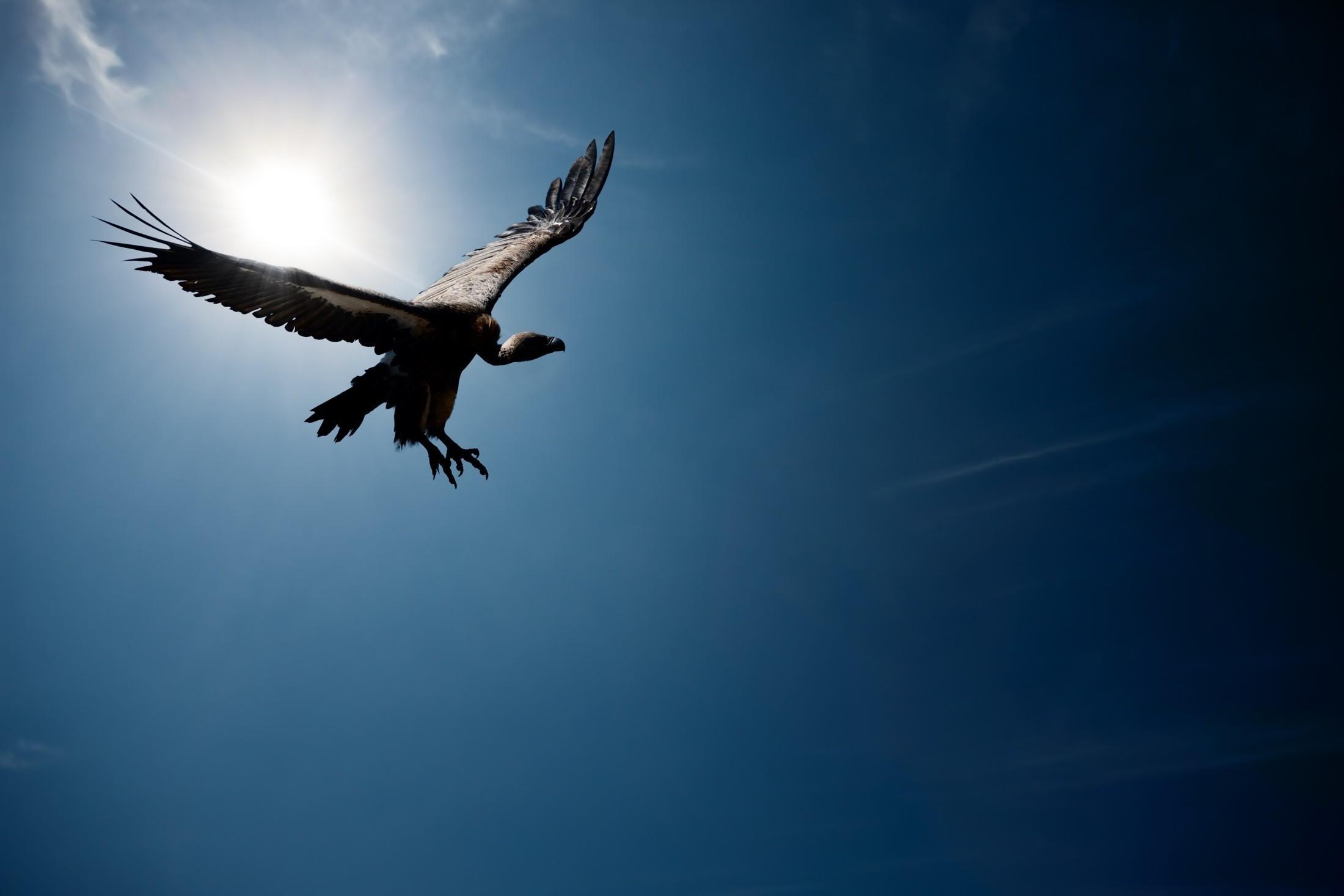 орел кружит картинки понедельник владивосток вновь