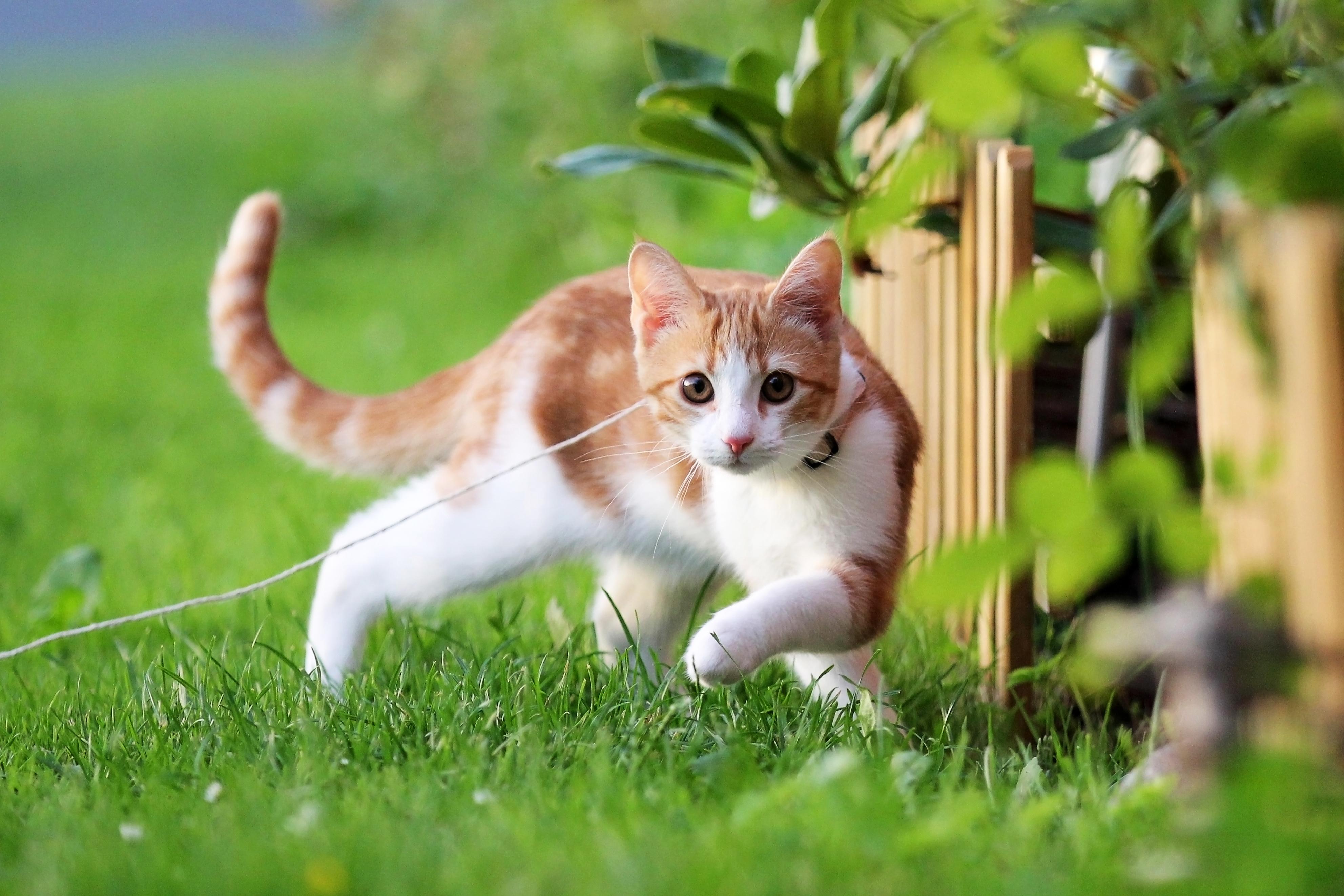 народу летний кот картинка течение полугода жюссье