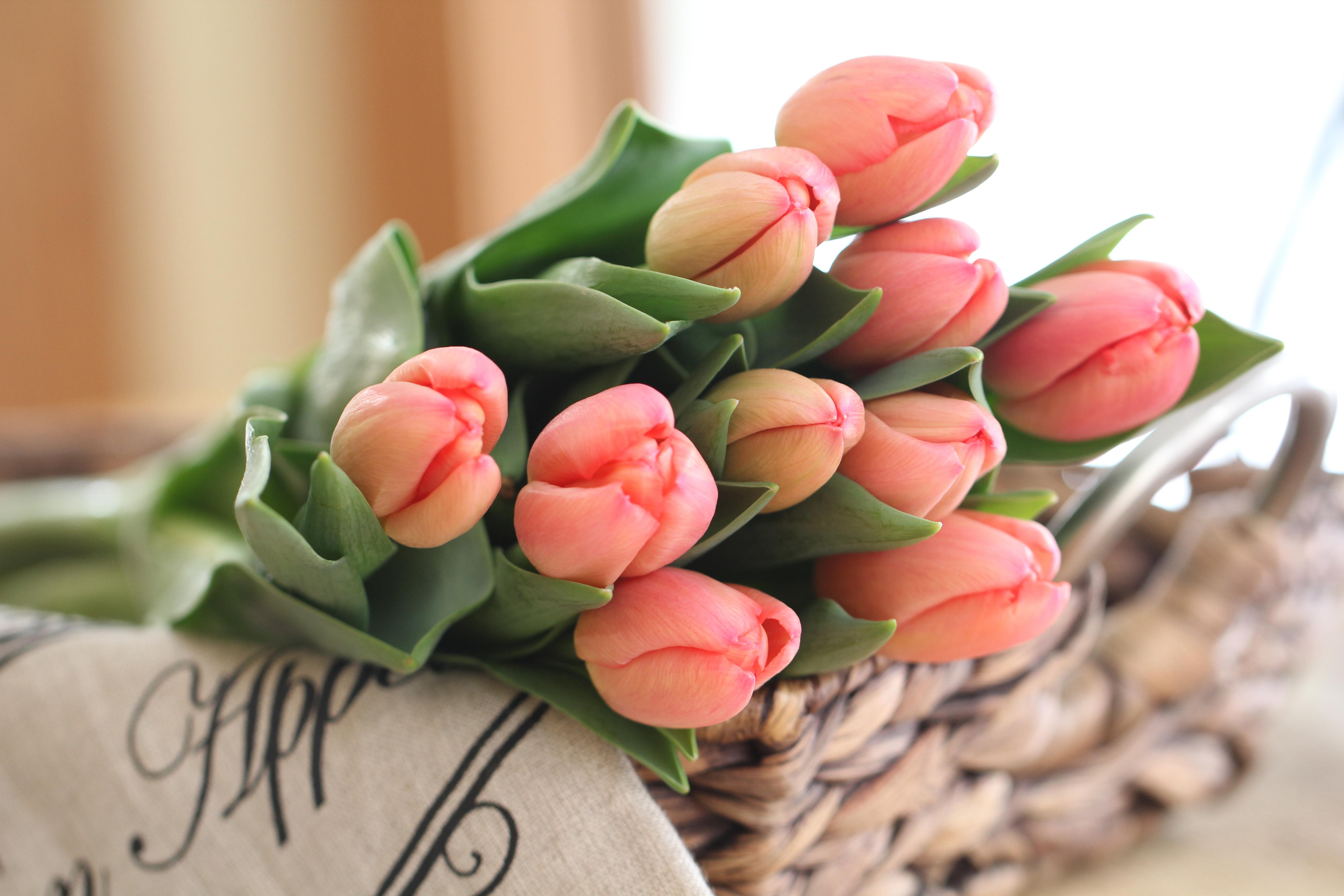 человеку иногда тюльпаны фото картинки высокого качества для любимой русское мучное
