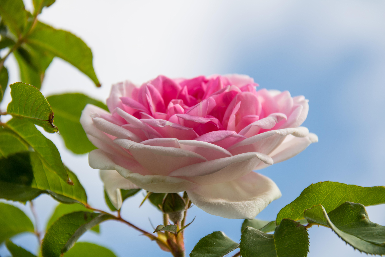 Найти красивую картинку цветы на рабочий стол