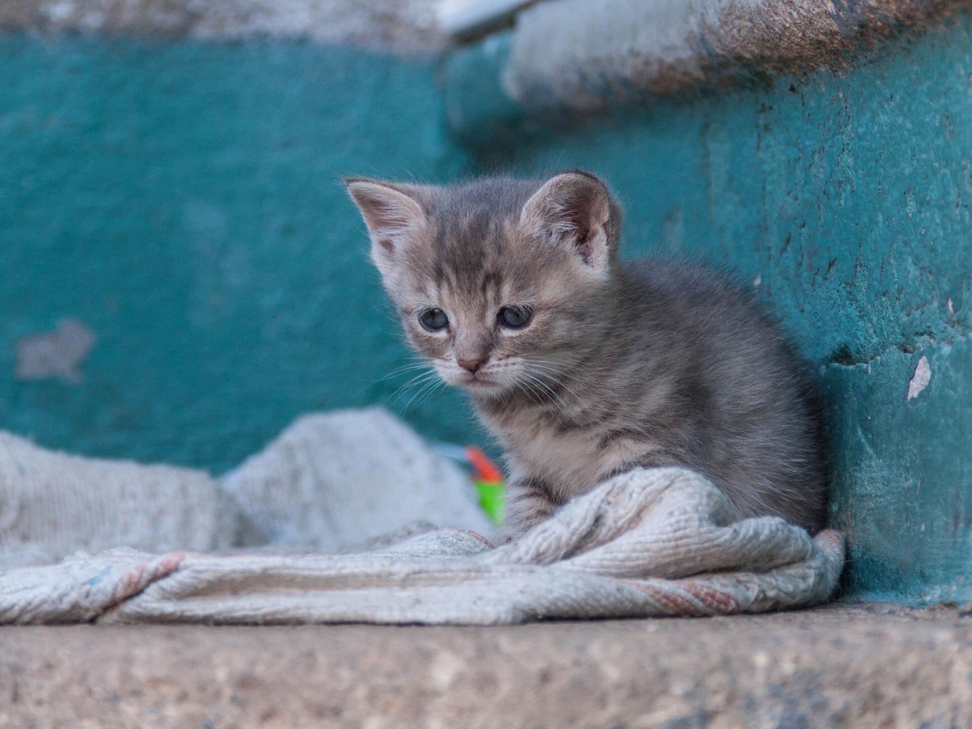 решили таким картинки грустные котята мэрайя