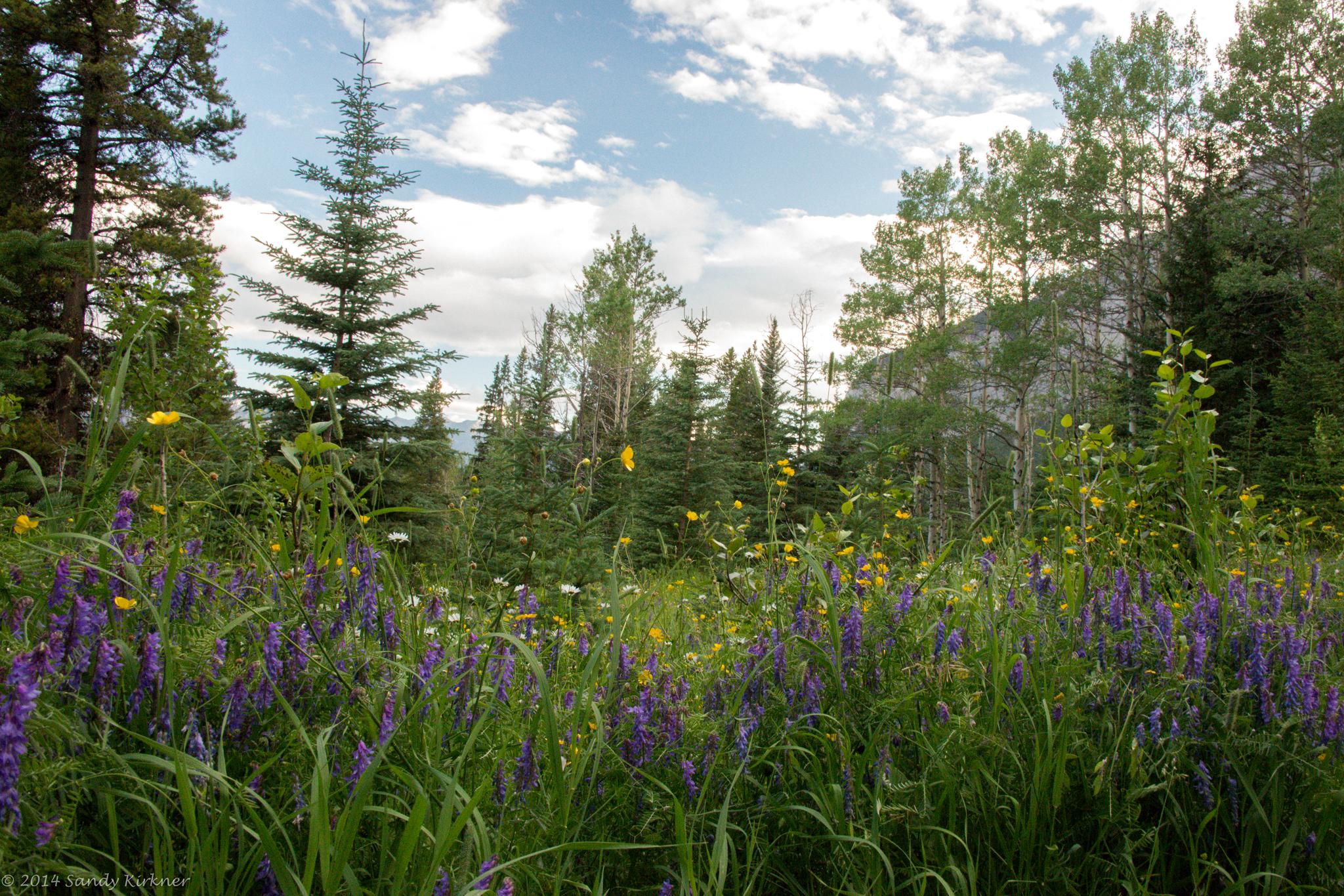 излагает лес с лугами картинки извлечение