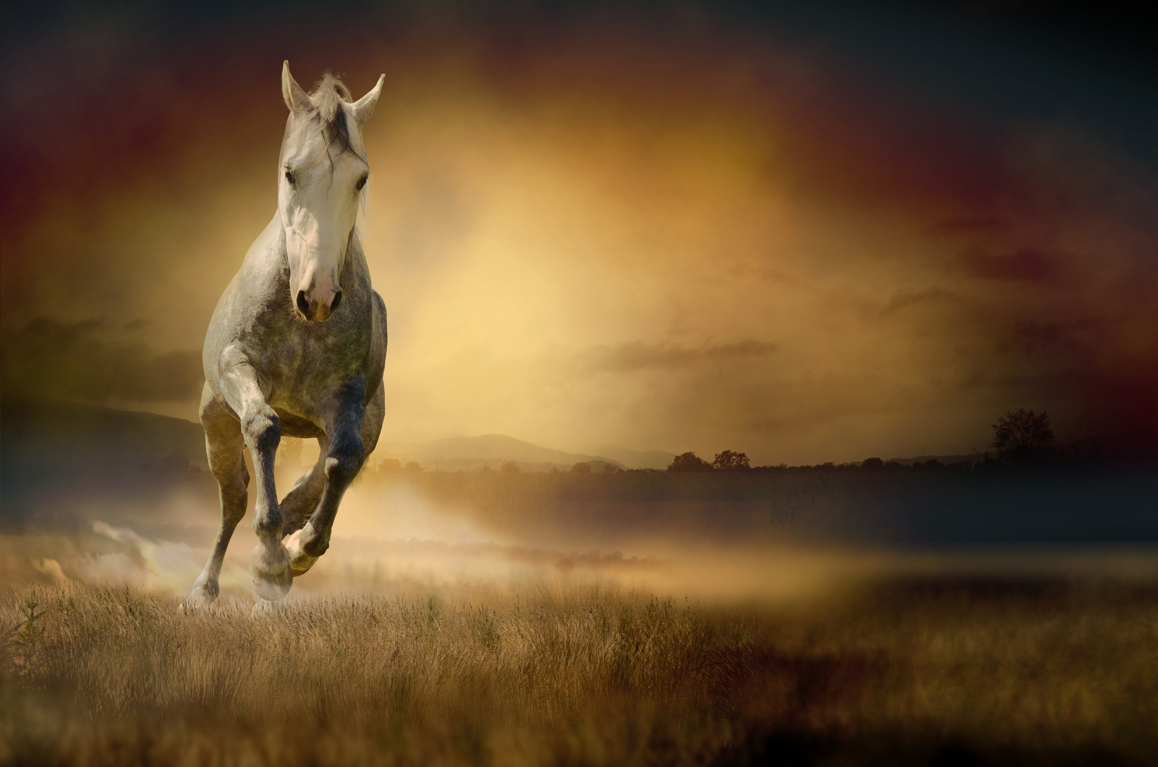 Идущая лошадь картинки
