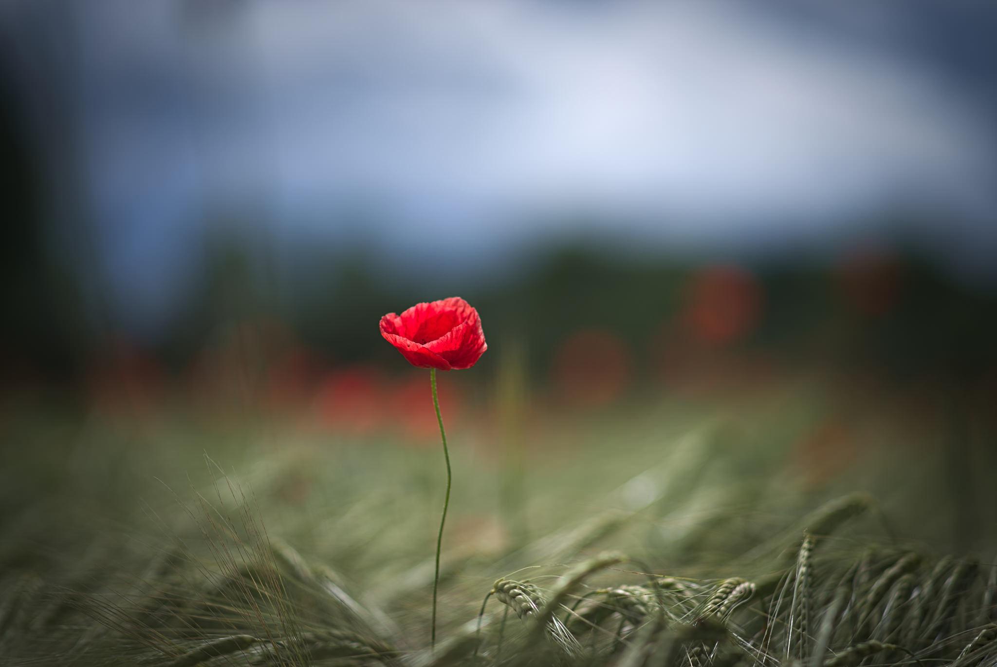 Картинка цветок одиночества
