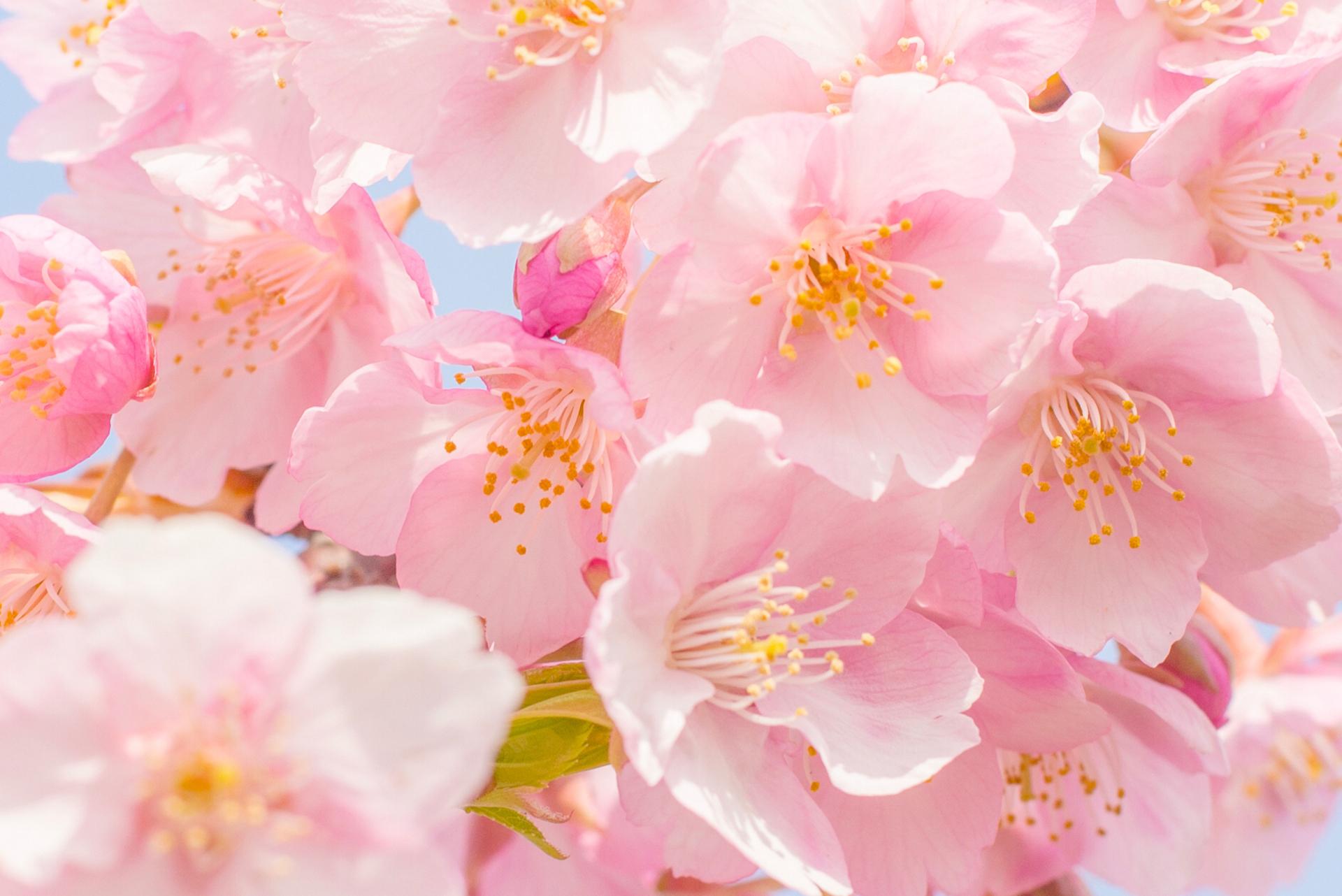 картинки рабочий стол цветочки розовым