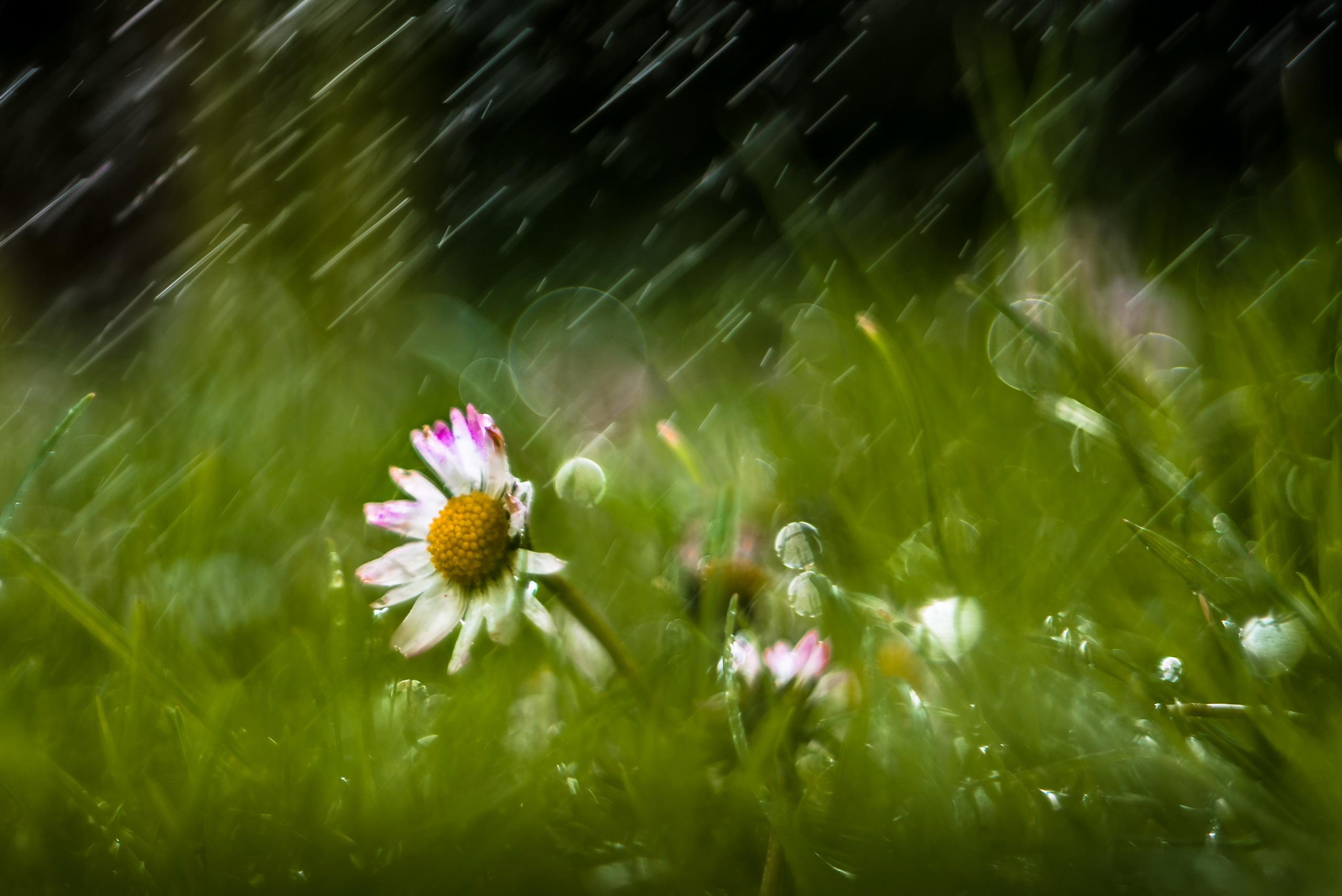 картинки на рабочий стол летний дождь пища жрать приколы