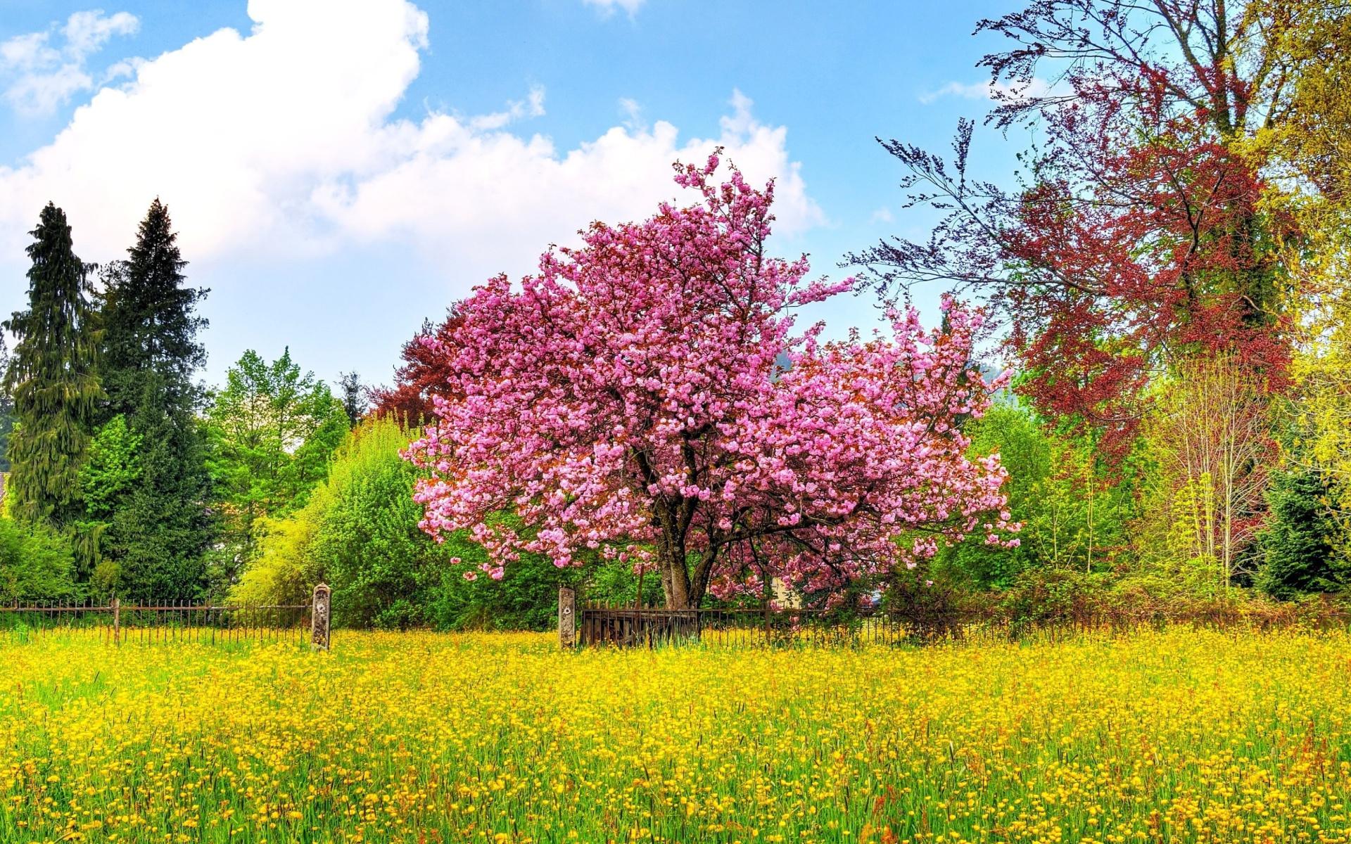105157) о весна, безконца и без края без конца и без края мечта!