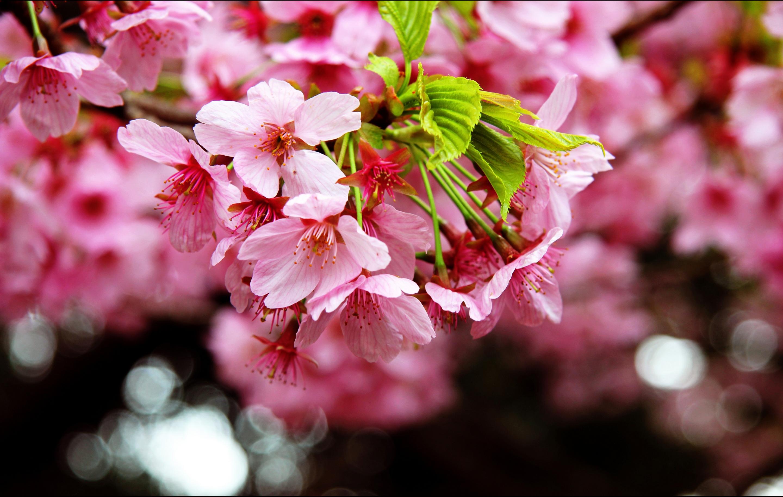 весна фото обои для мобильника целом
