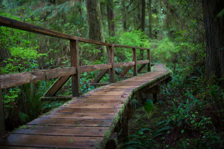 Природа картинки мостики