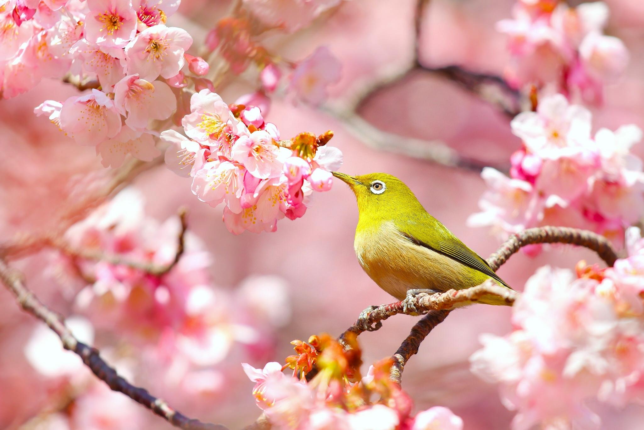 картинки весны для планшета