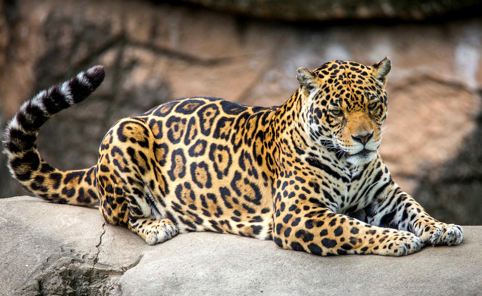 Фото красивых котиков со смыслом светлую