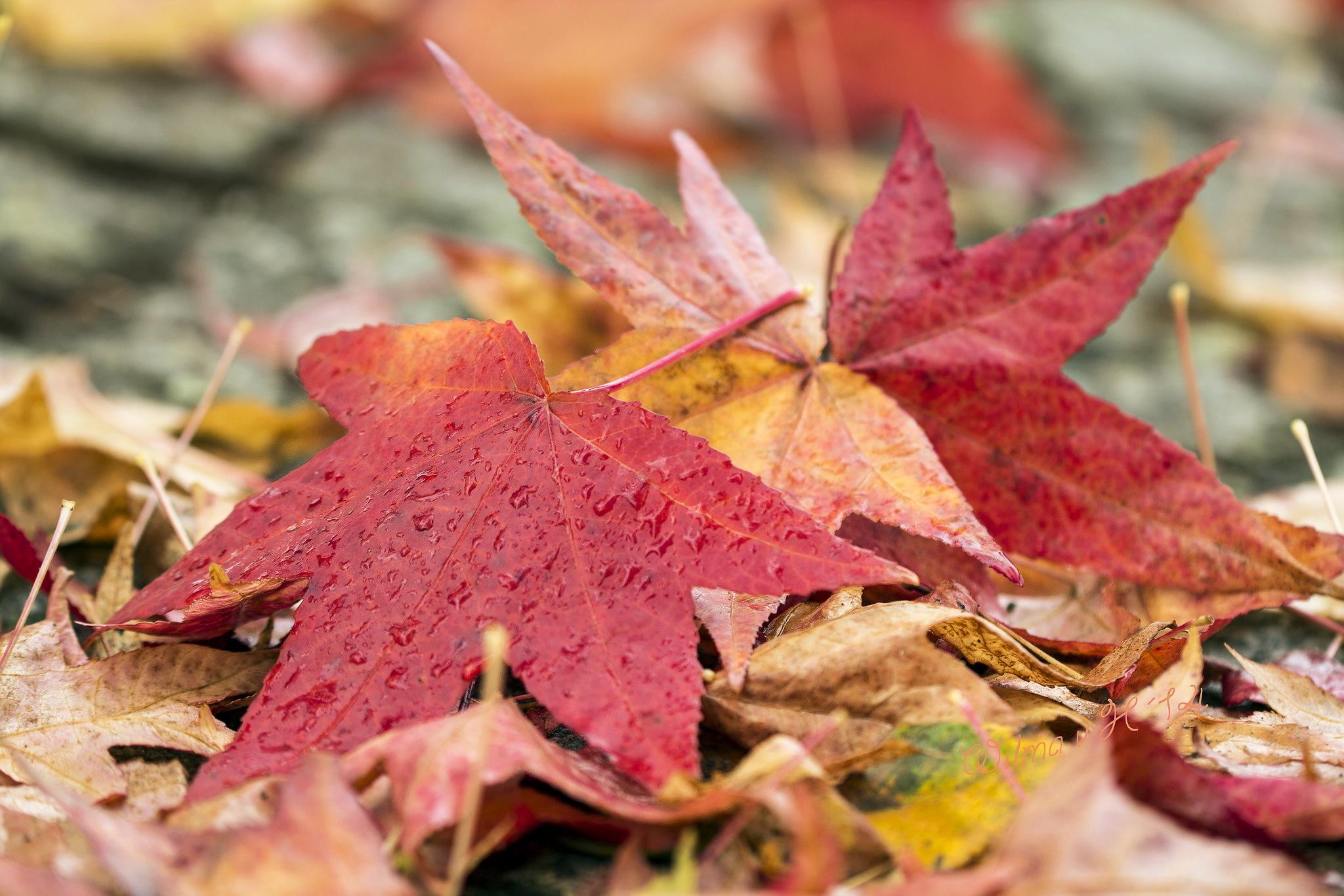 картинки осень обой
