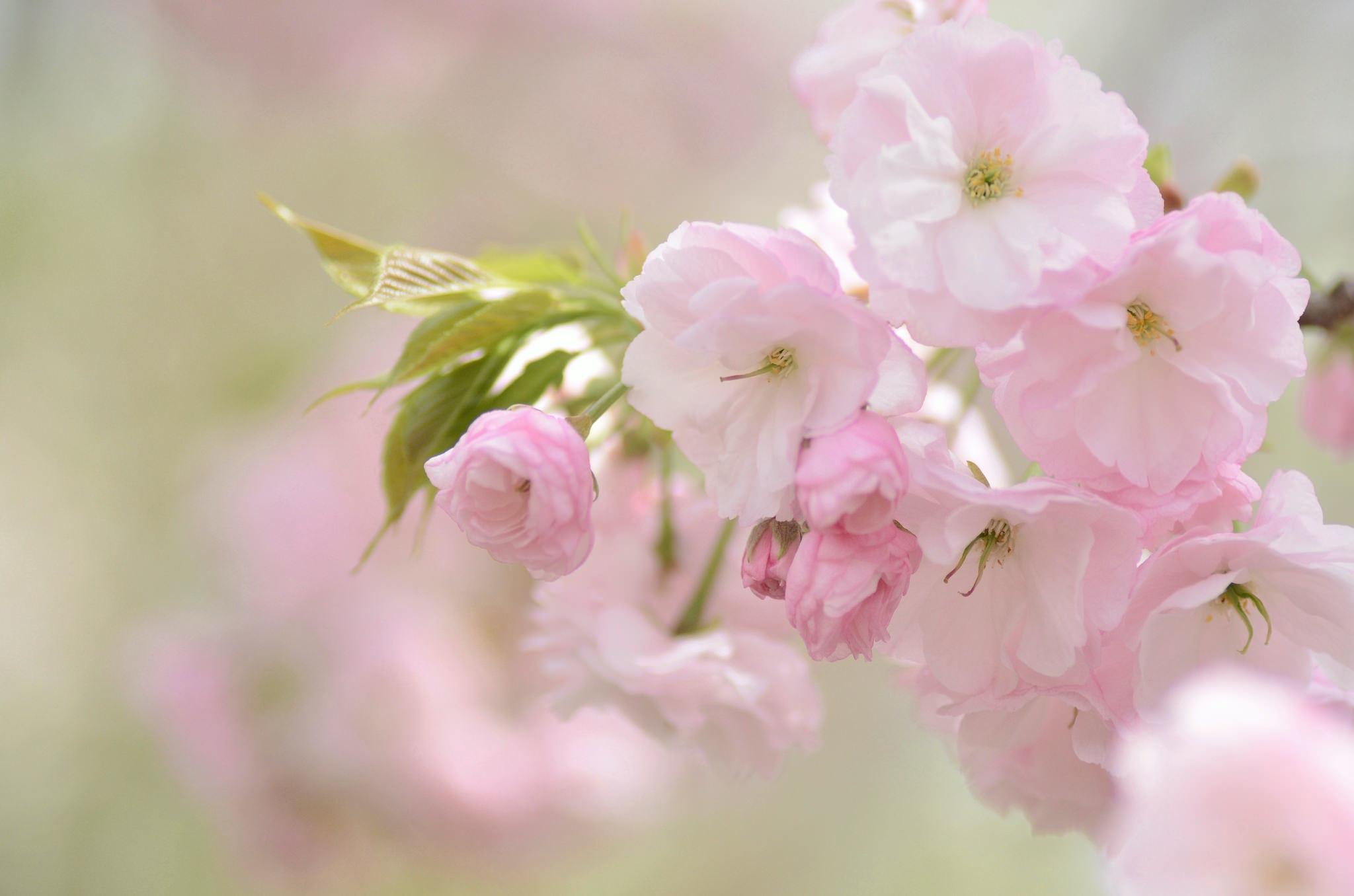 Картинка на рабочий нежные цветы