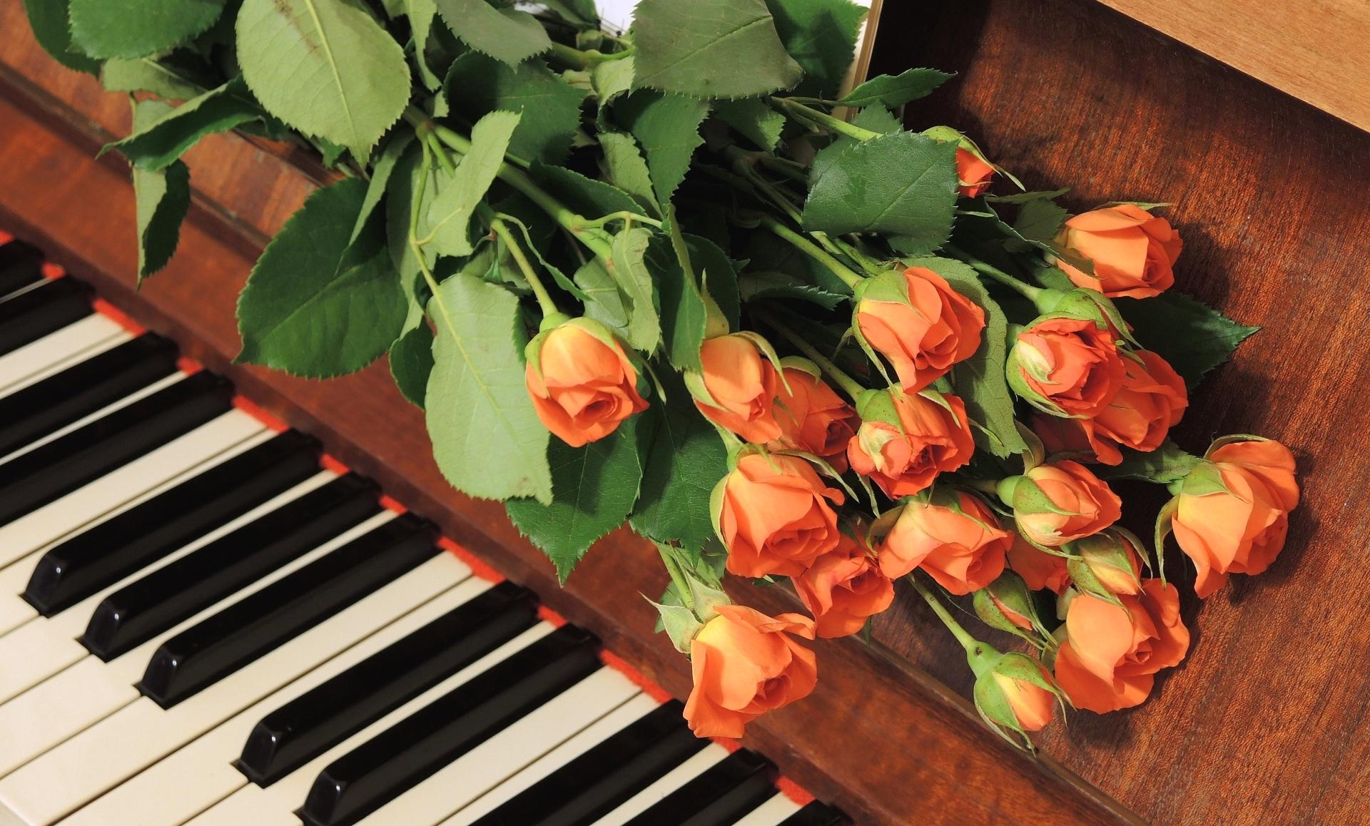 Картинки цветок музыка