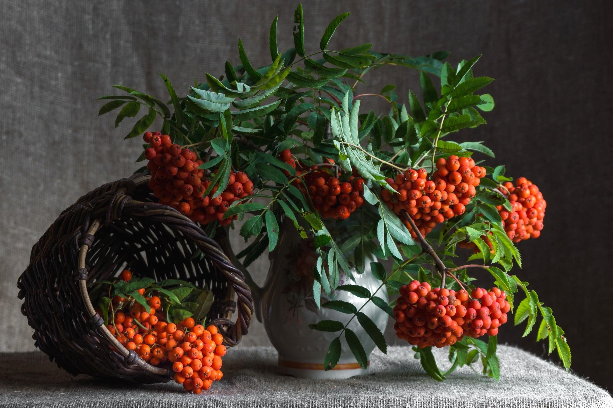 картинки из ягод осени для рабочего стола обширным