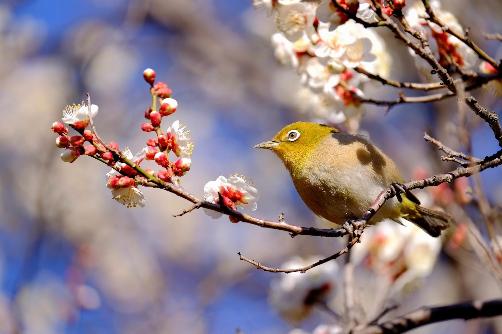 Картинки май природа птицы животные