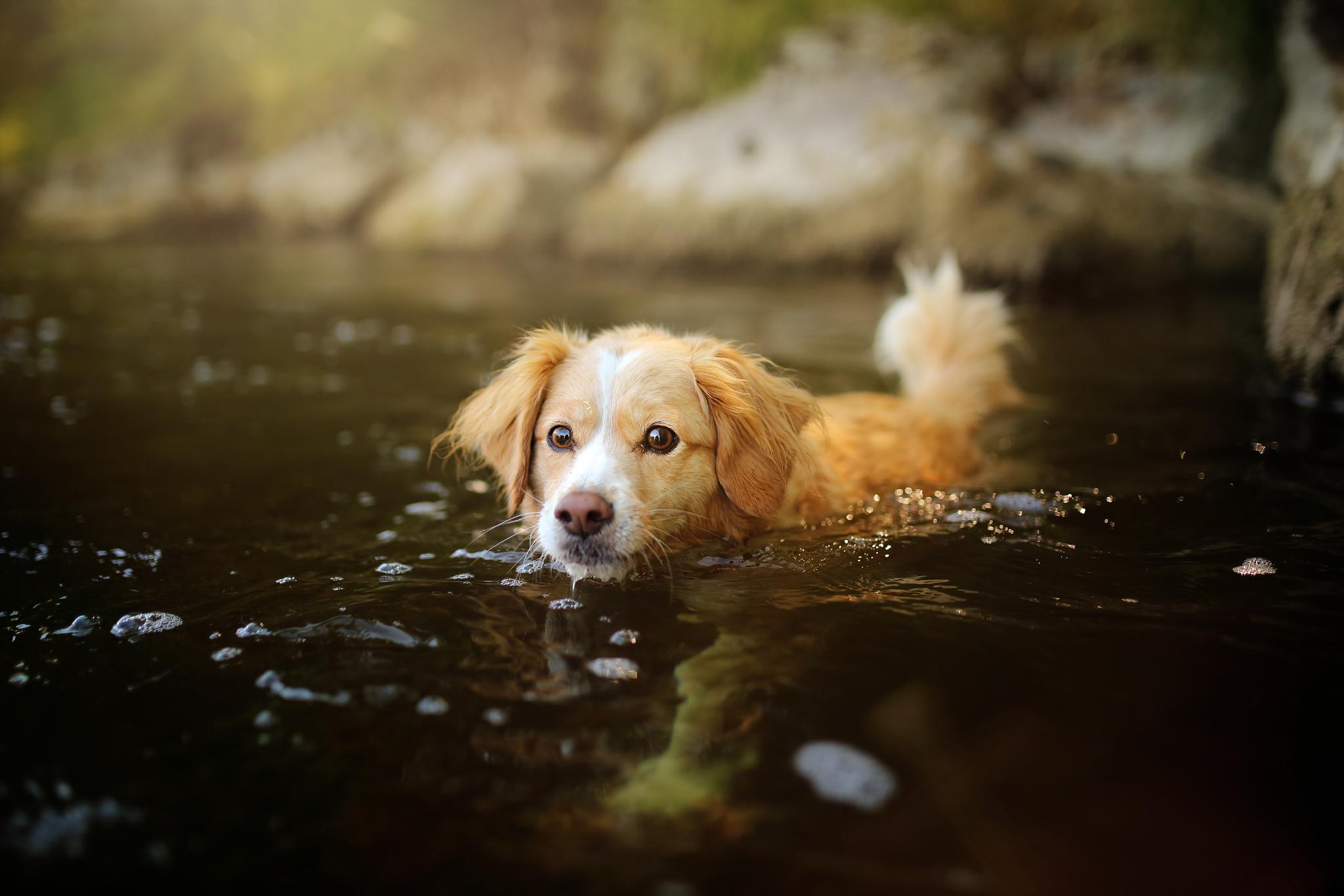 медиков картинки с собаками ютуб удобные