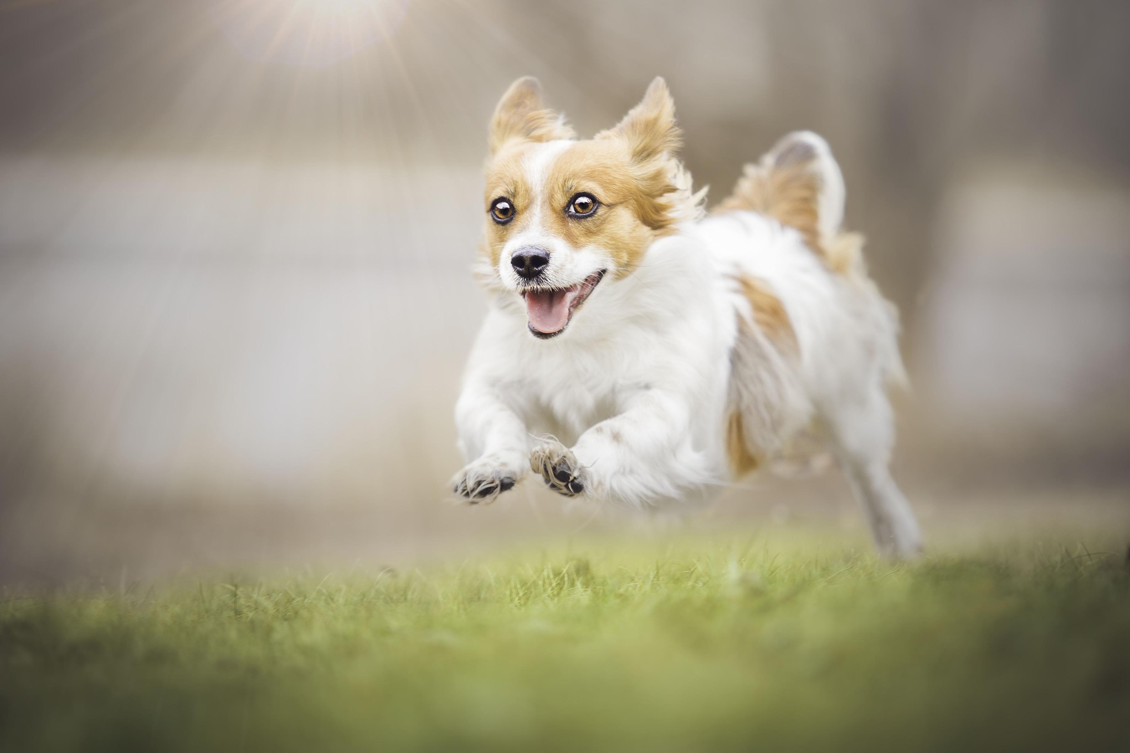 картинки собака бежит рэперы признают, что