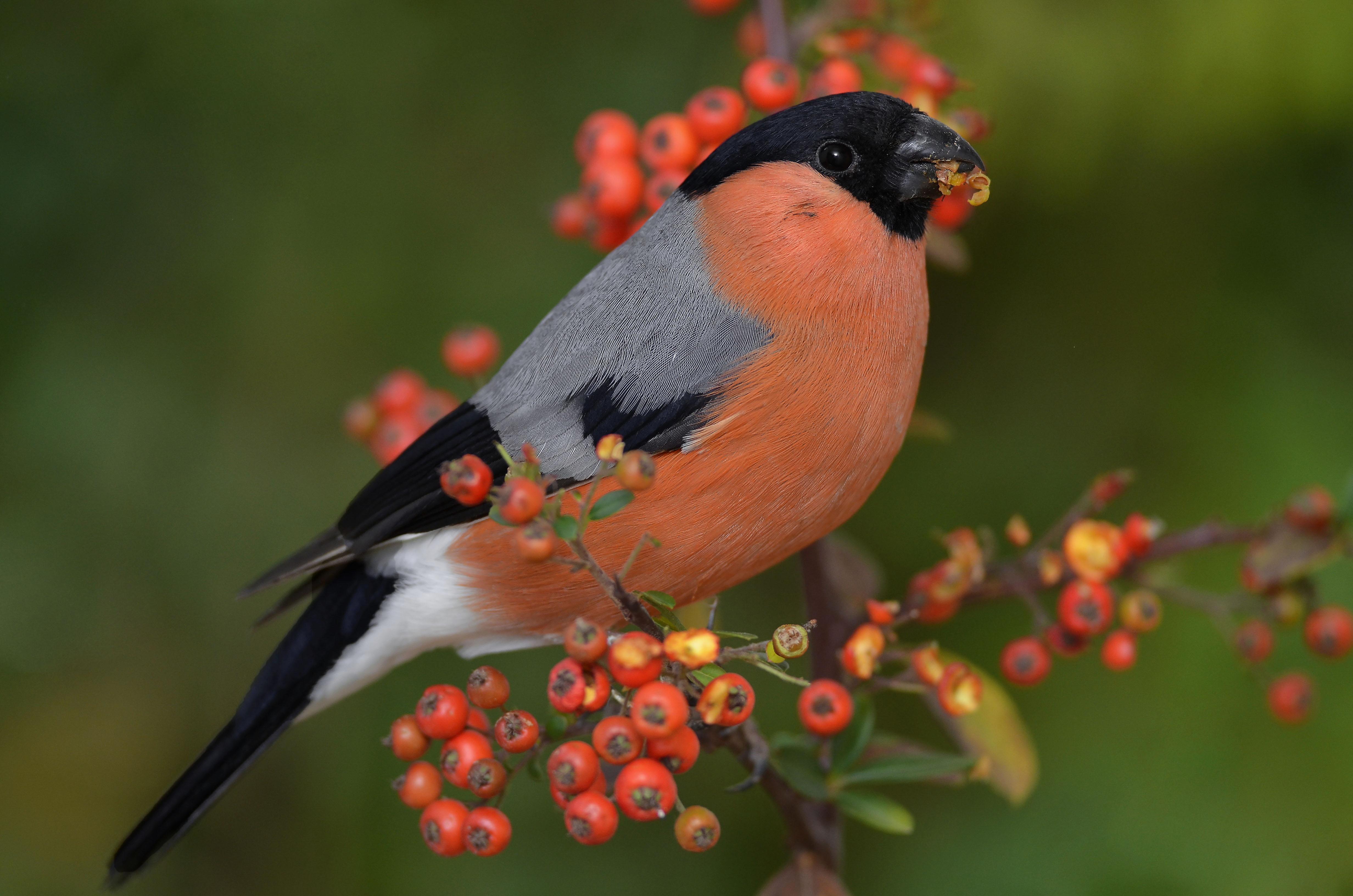 Северные птицы названия и фото эффективное упражнение