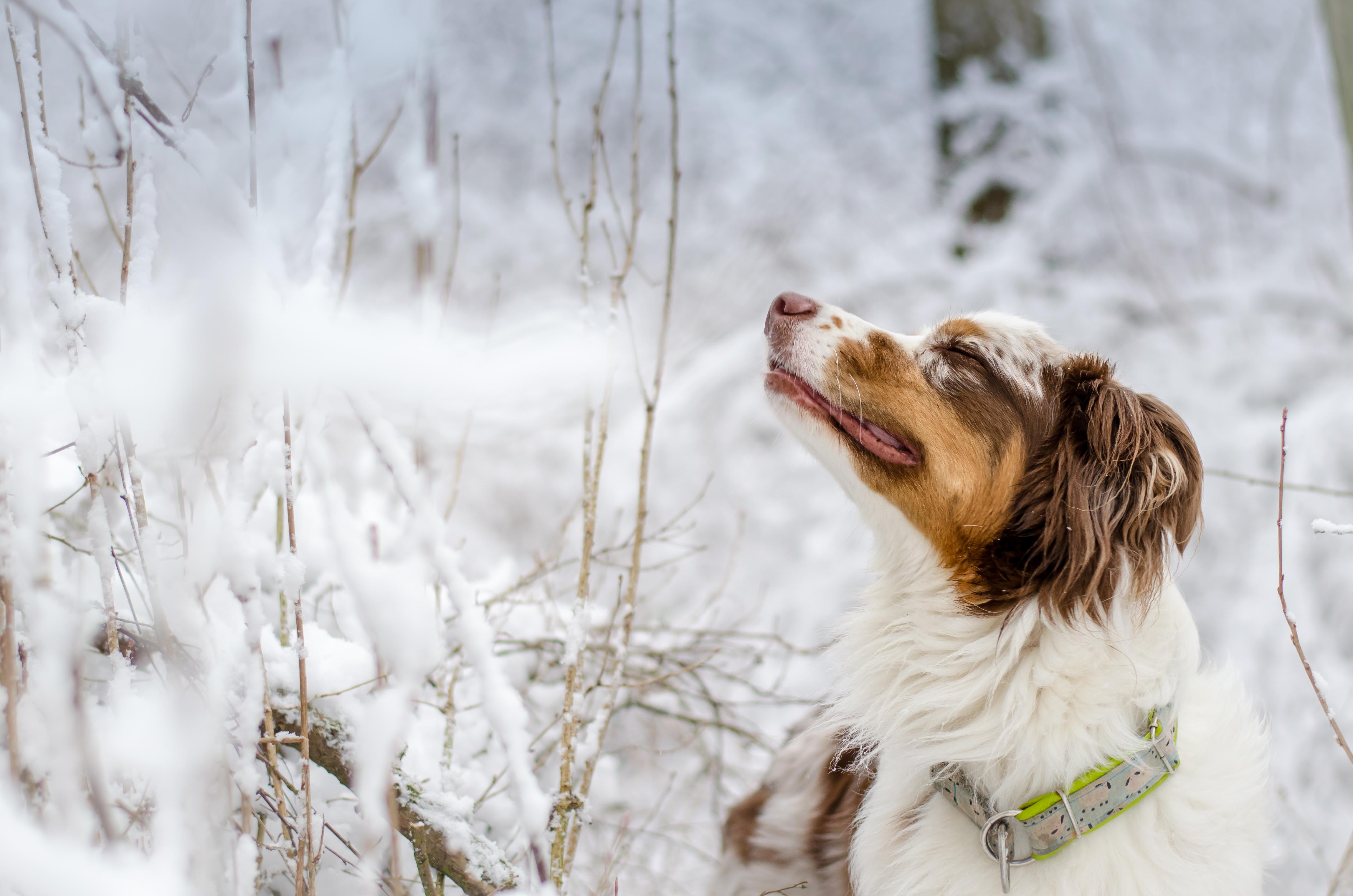его историческом фотки собачки в снегу тоннель, дикие холмы