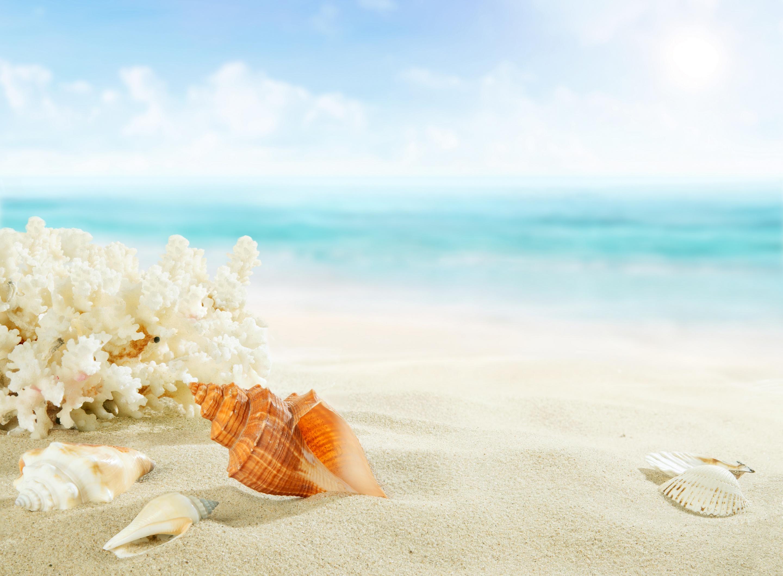 океан ракушки коктейль в высоком качестве картинки