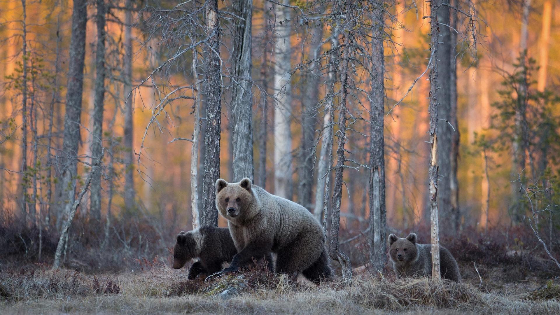 Картинки на рабочий стол дикой природы